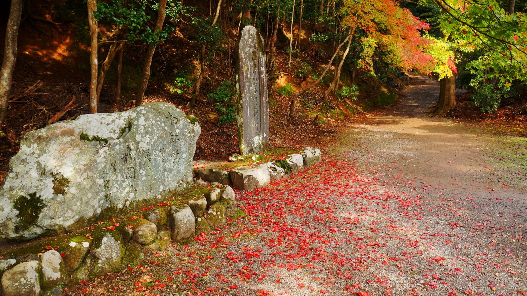 神護寺の鮮やかな赤い散りもみじ