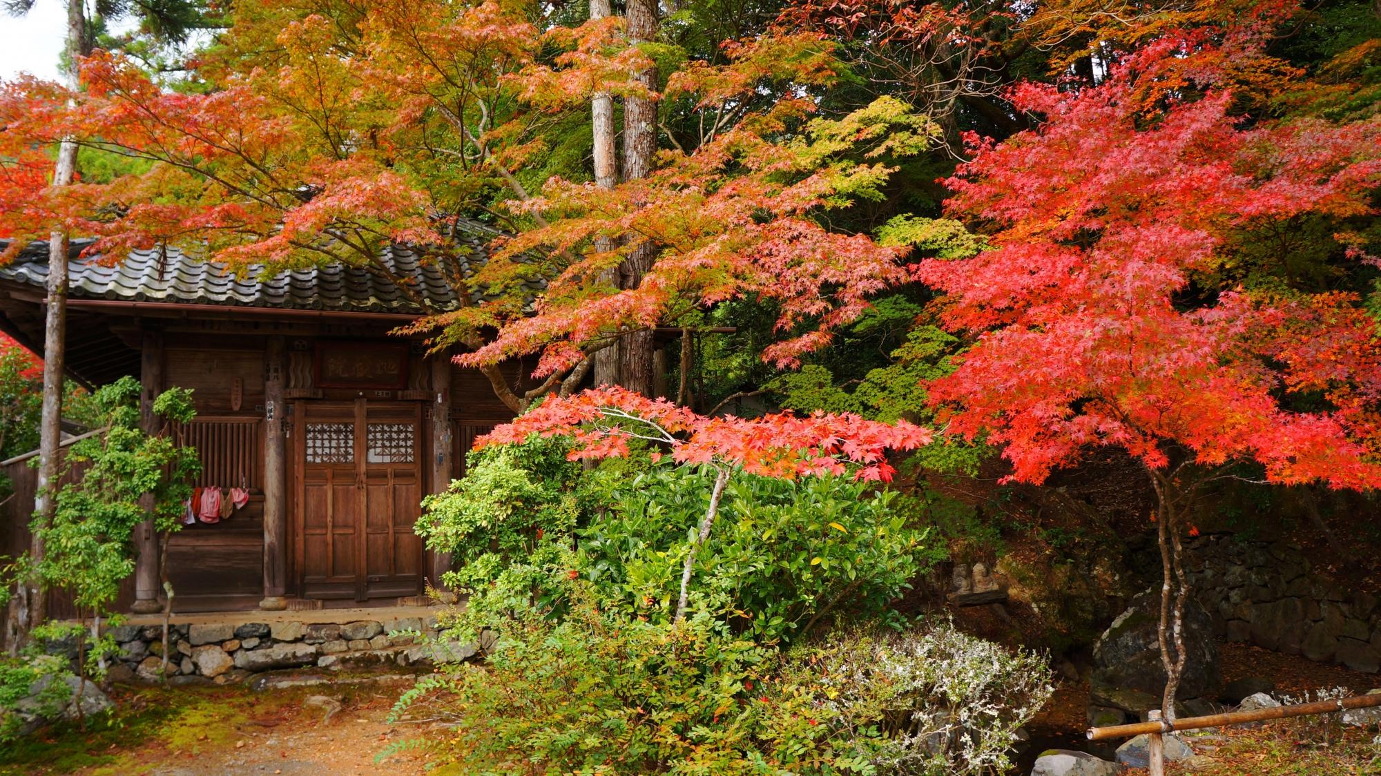 神護寺の地蔵院の紅葉