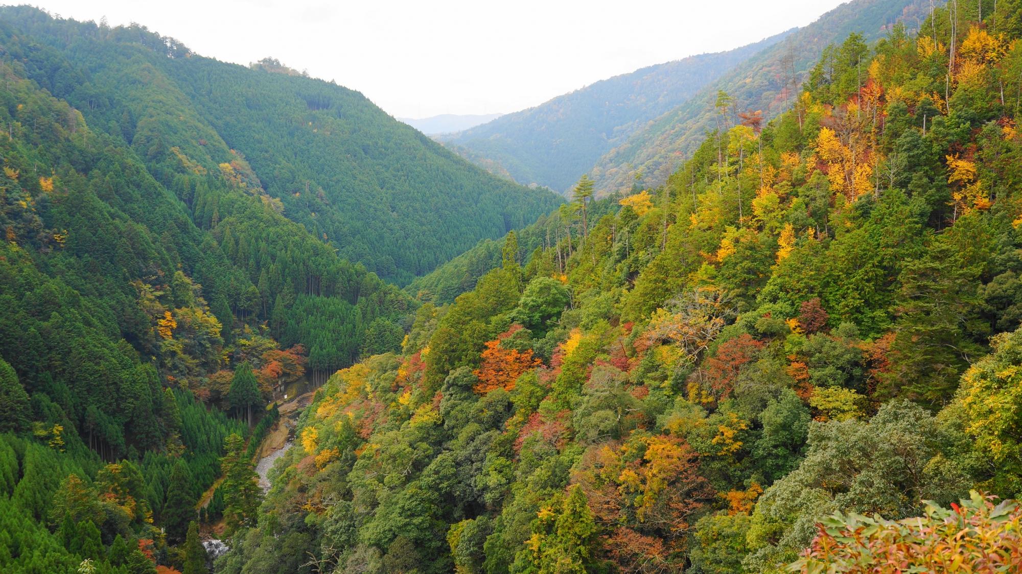 神護寺の素晴らしい紅葉や秋色の情景