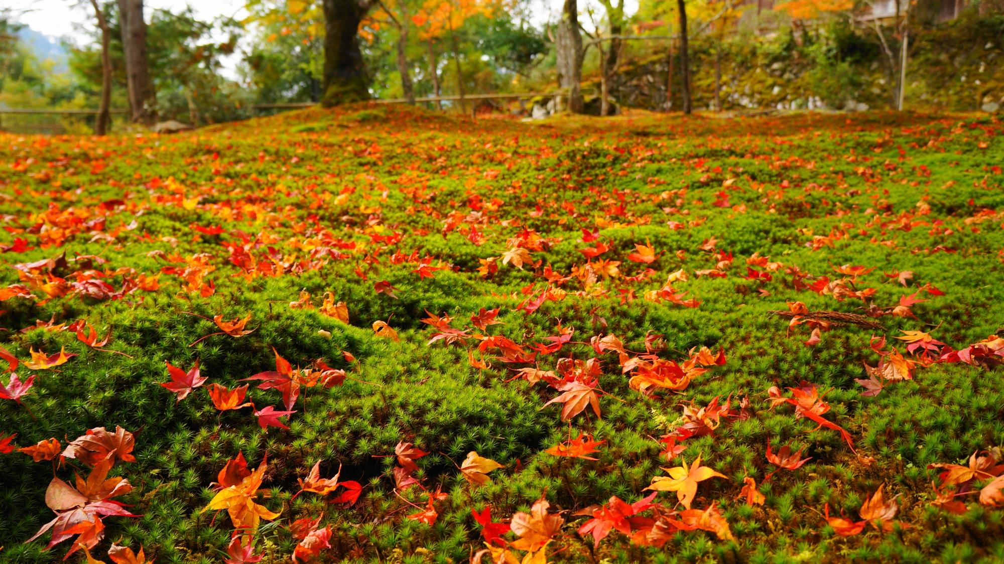 緑の苔の上の楽しそうな色とりどりの散りもみじ