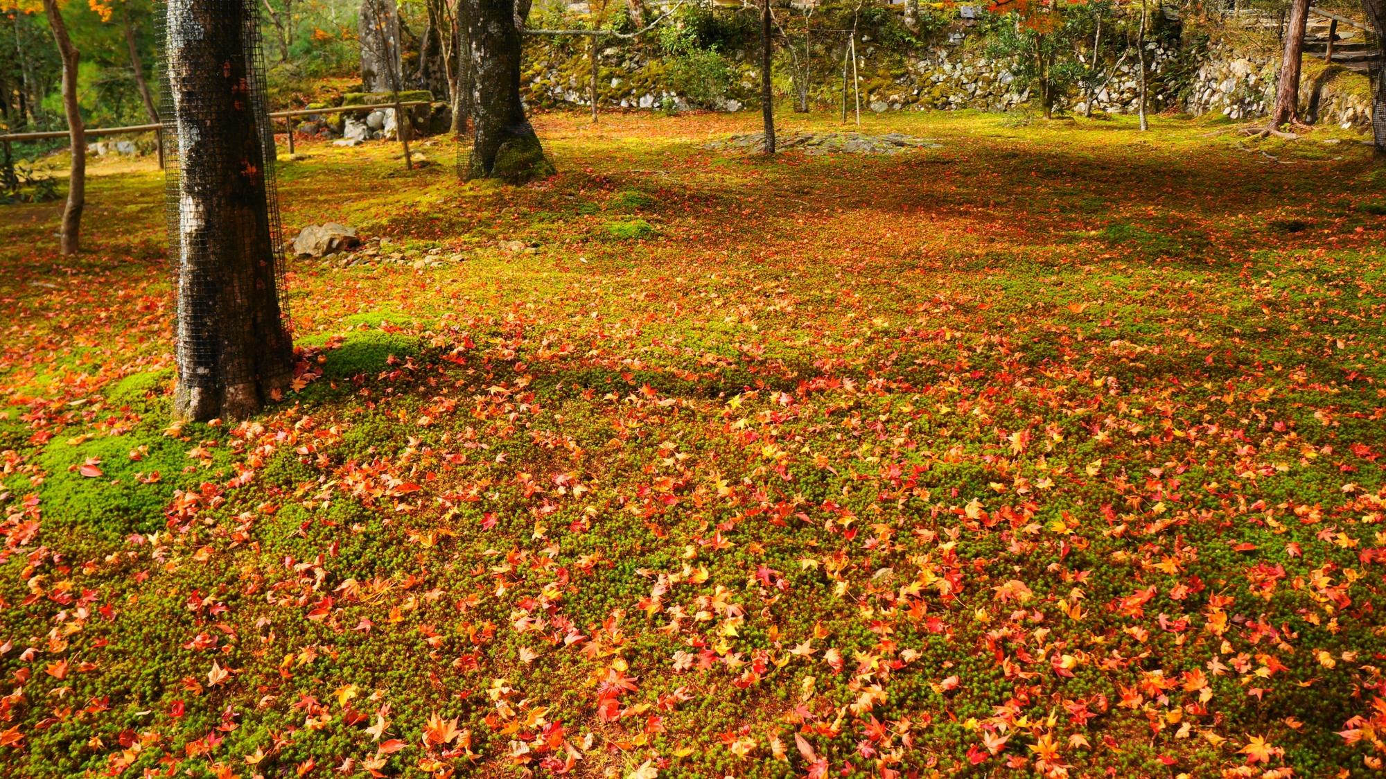 神護寺の錦雲渓前の苔と散り紅葉