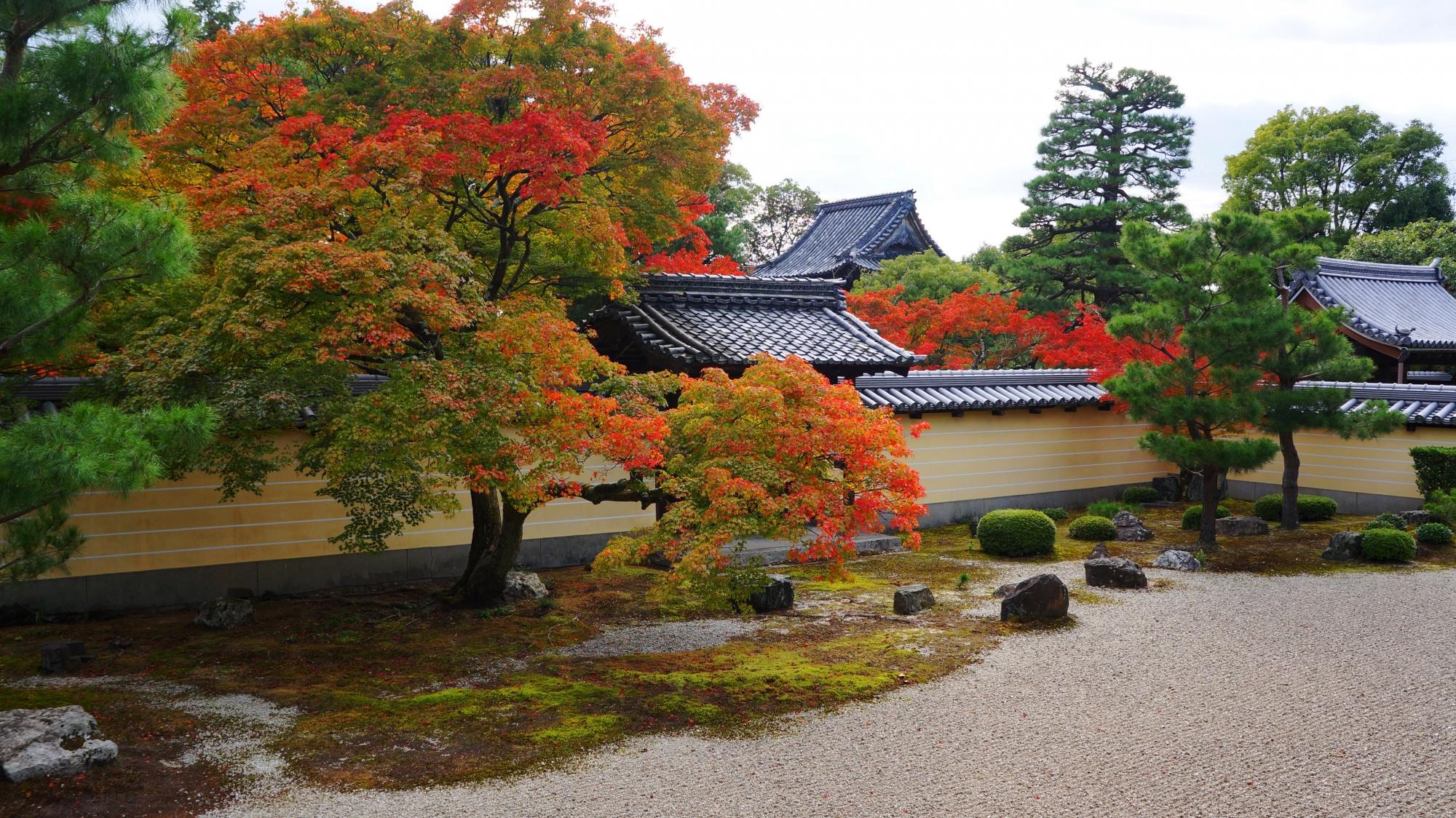 等持院の勅使門の向こう側で赤く華やぐ紅葉