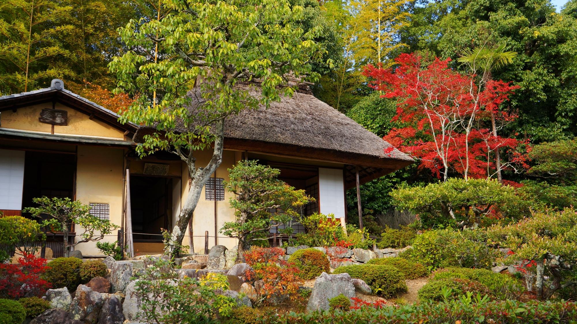 緑と風情溢れる庭園で鮮やかに色づく紅葉