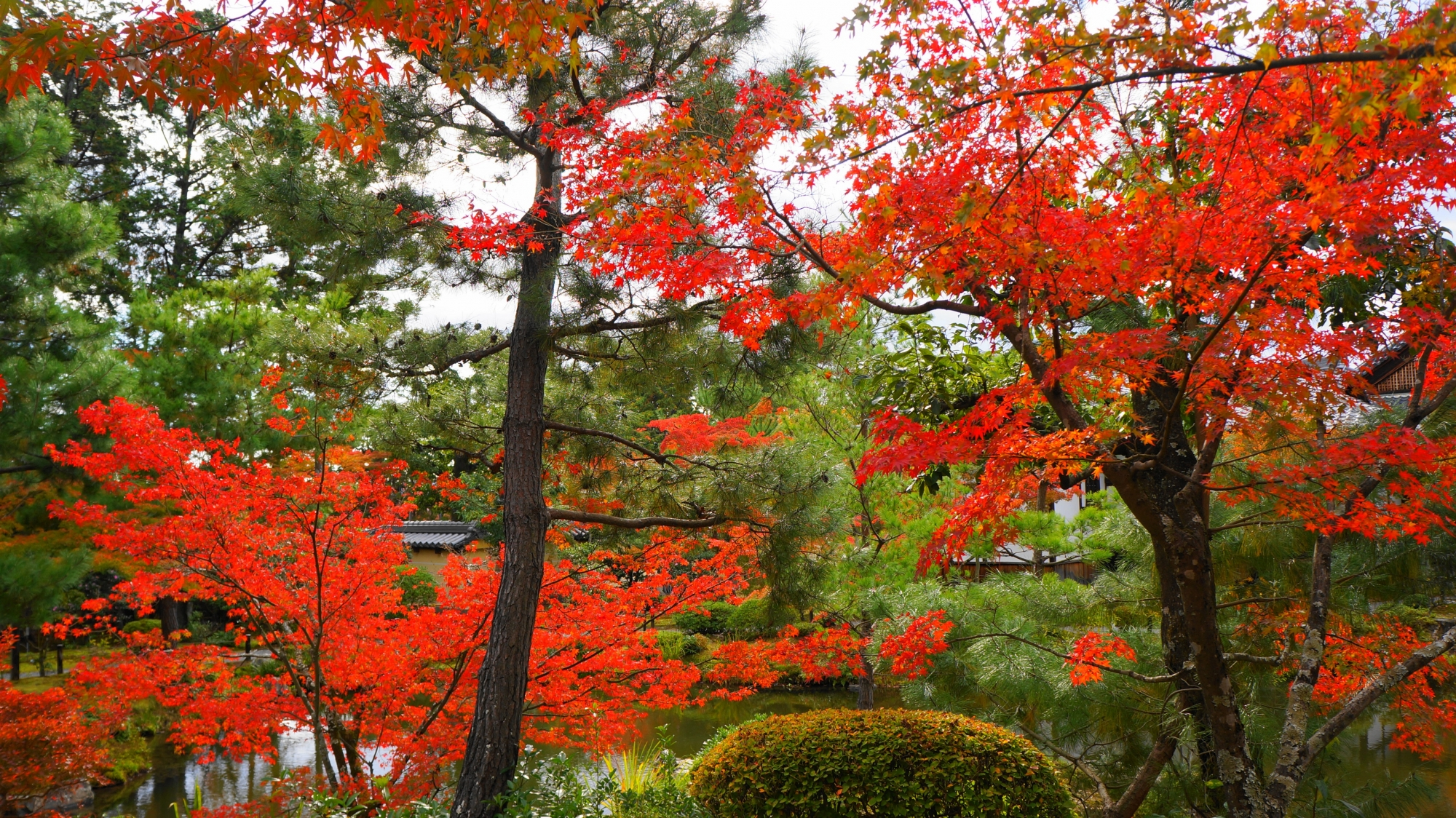 蓬莱島から眺めた秋色に染まった心字池