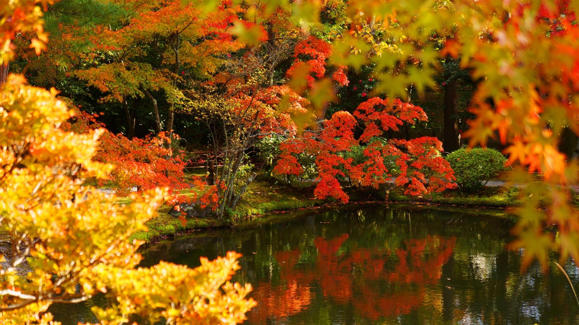 太陽に照らされ煌く秋色と紅葉の水鏡
