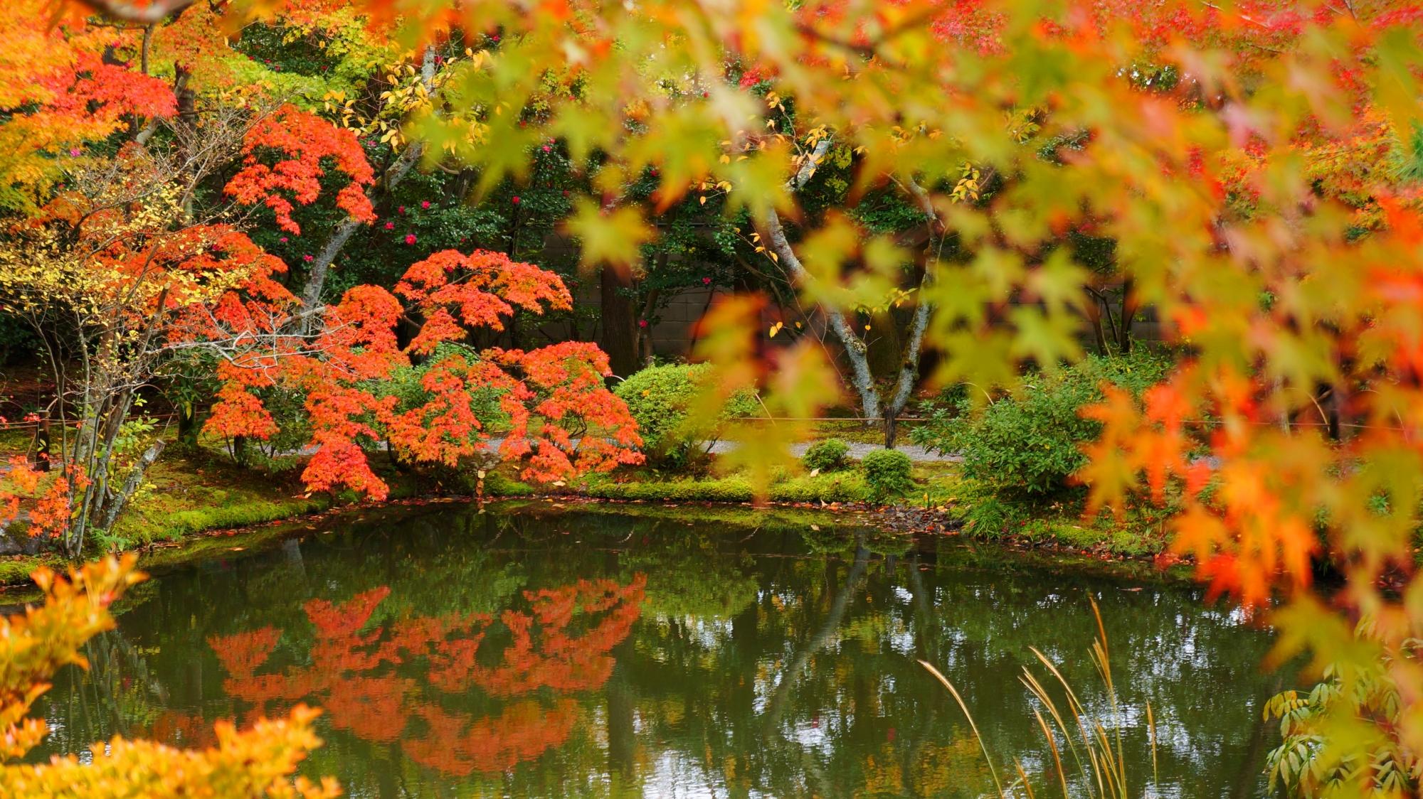 等持院の水辺を彩る風情ある紅葉と水鏡