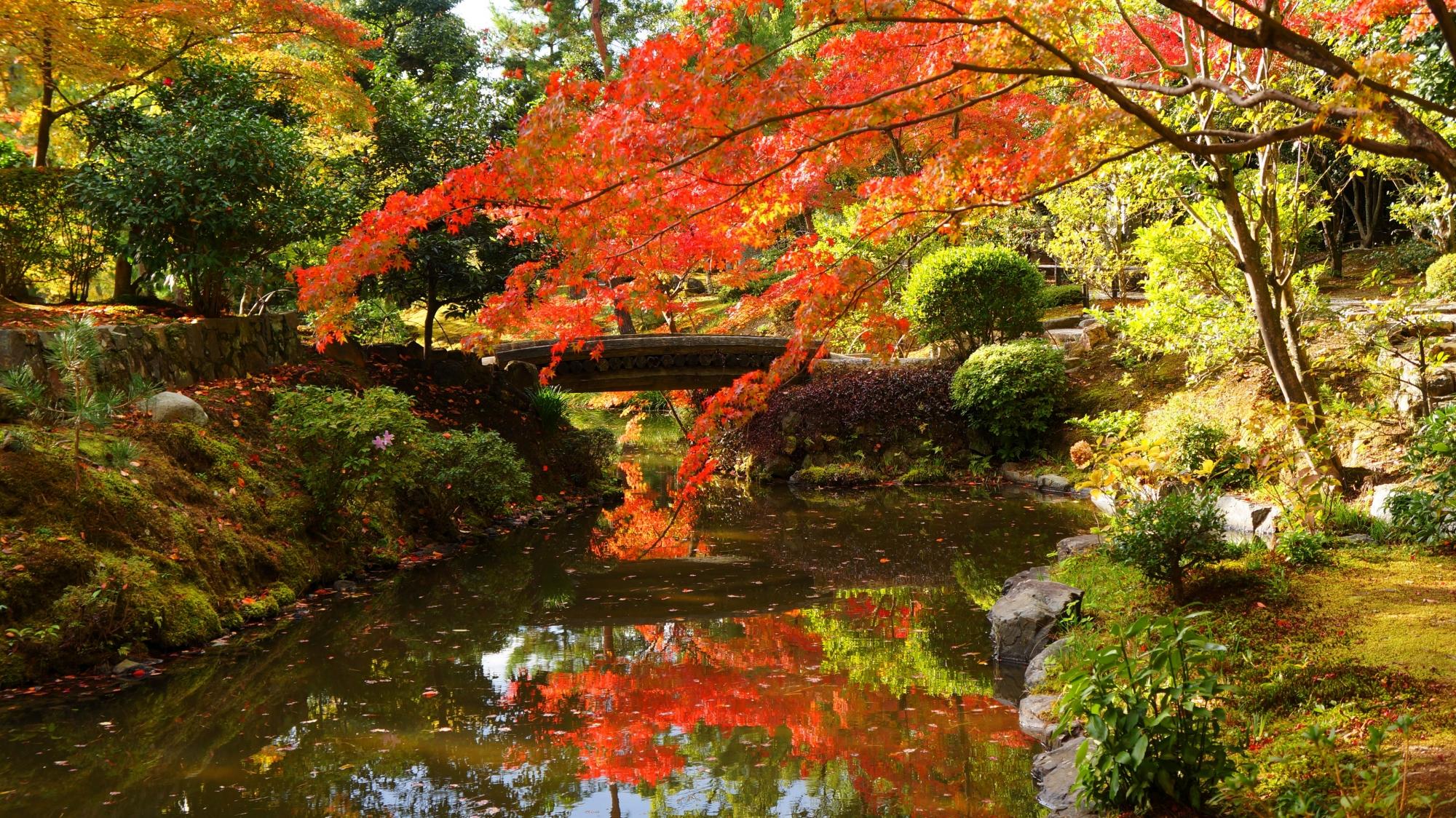 美しい紅葉の水鏡で知られる等持院の心字池