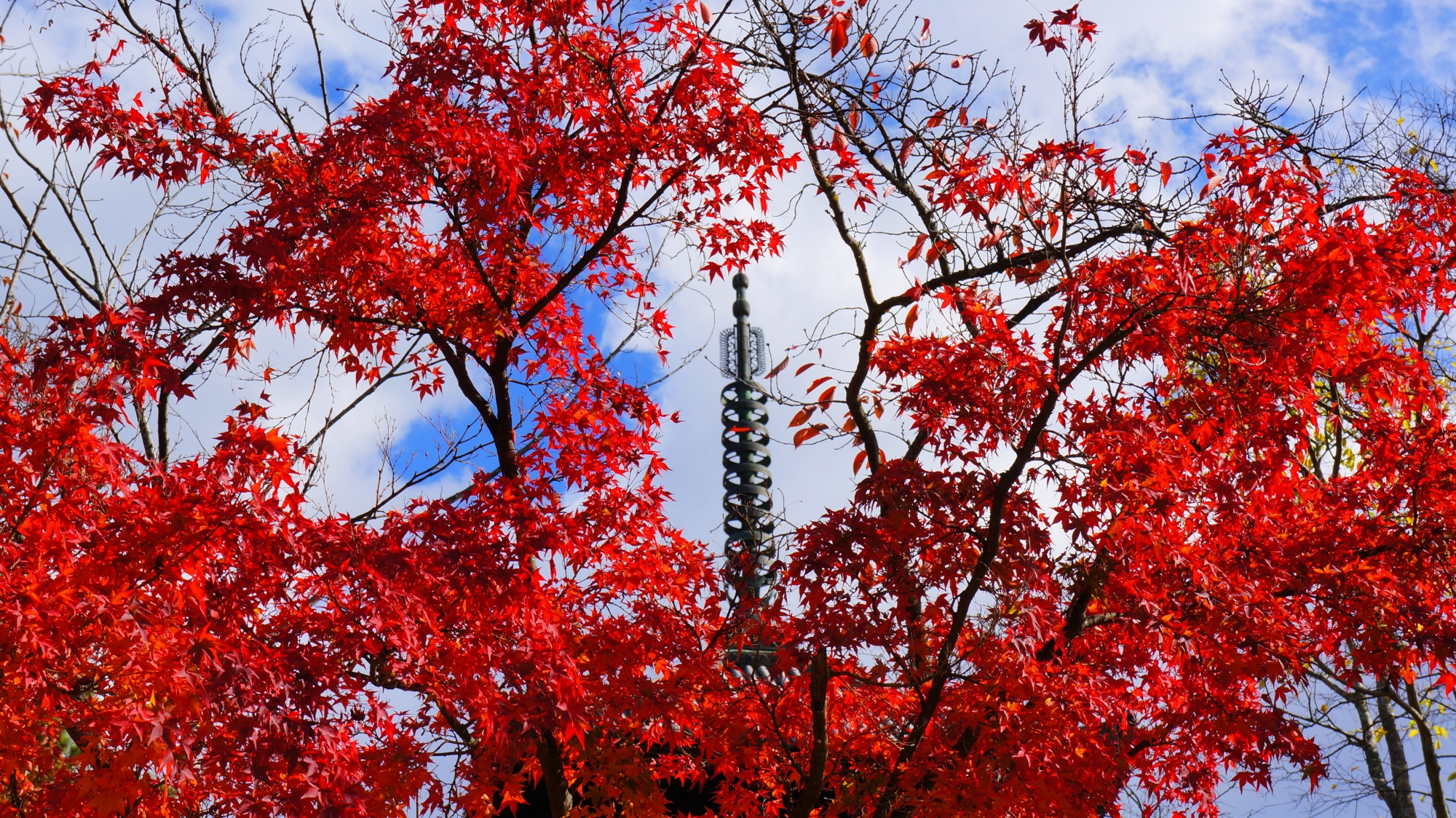 五重塔を染める真っ赤な紅葉