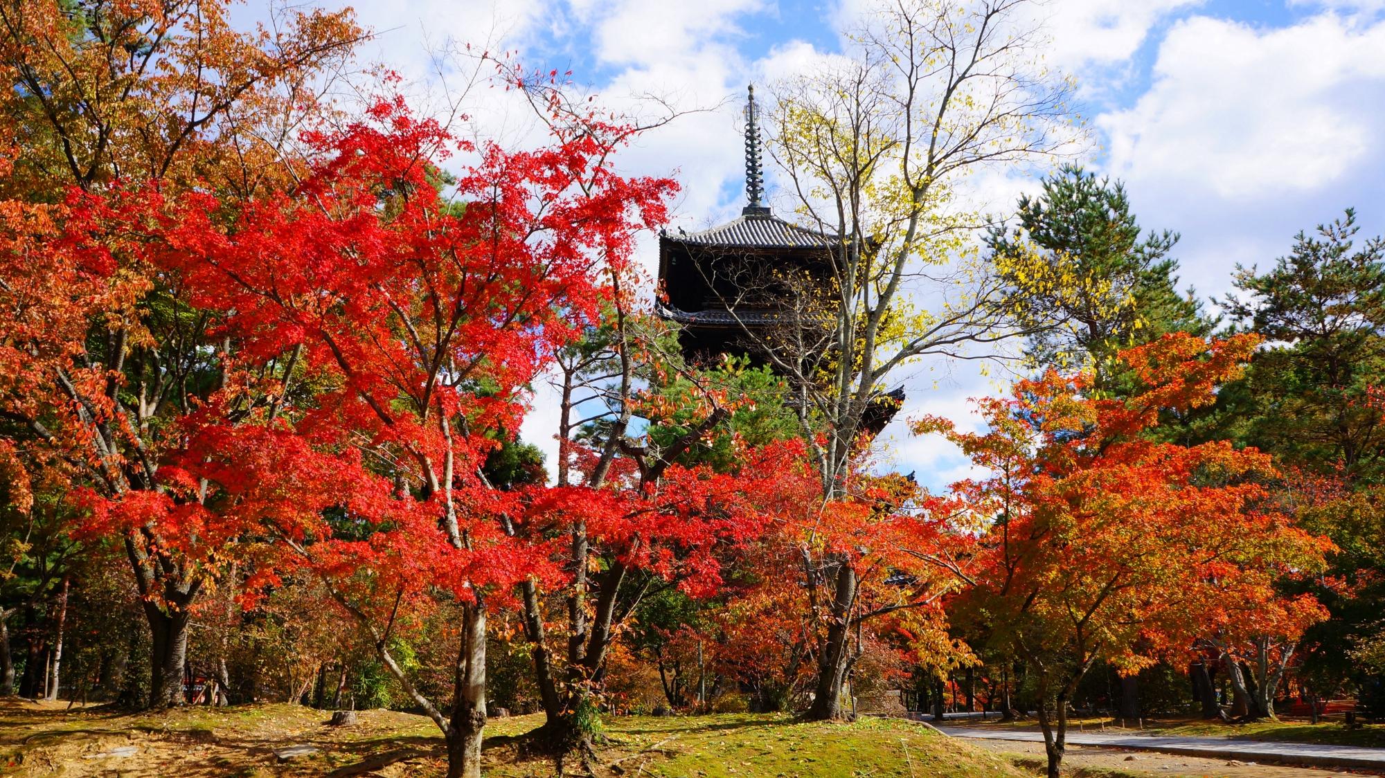 仁和寺の五重塔と鮮やかな紅葉