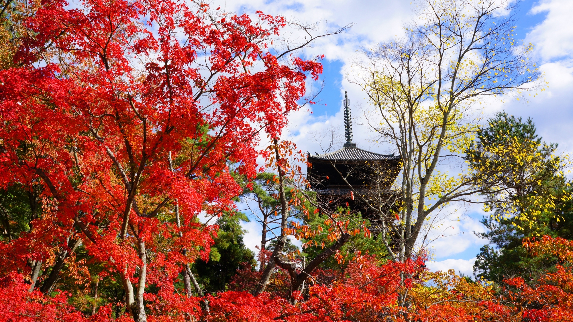 煌く紅葉につつまれる五重塔