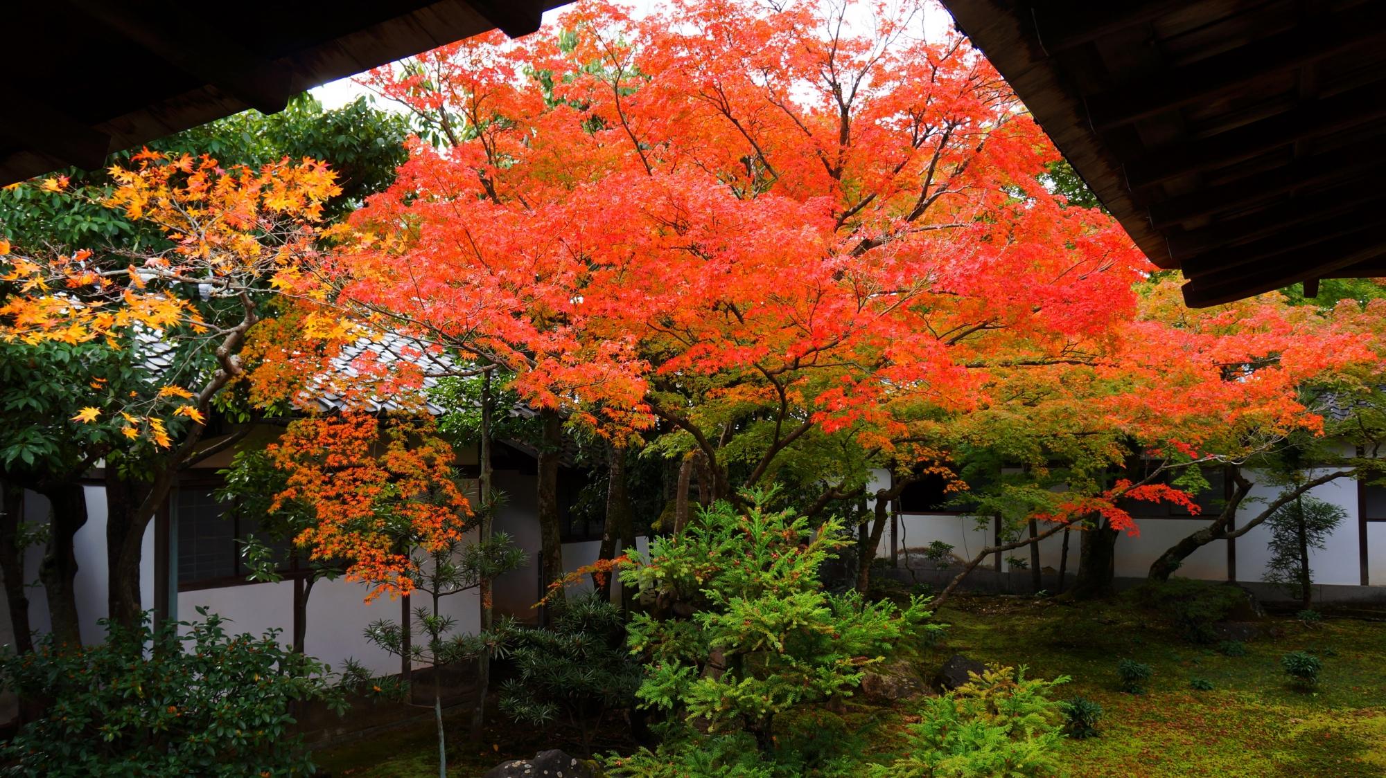 庇の下から溢れそうな華やかな紅葉
