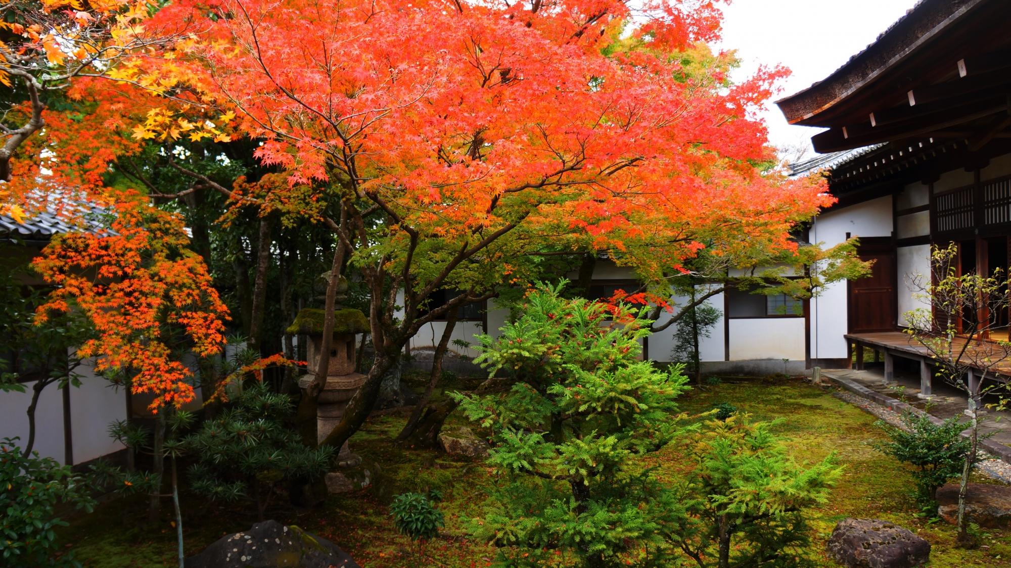 黒書院中庭の風情ある見事な紅葉