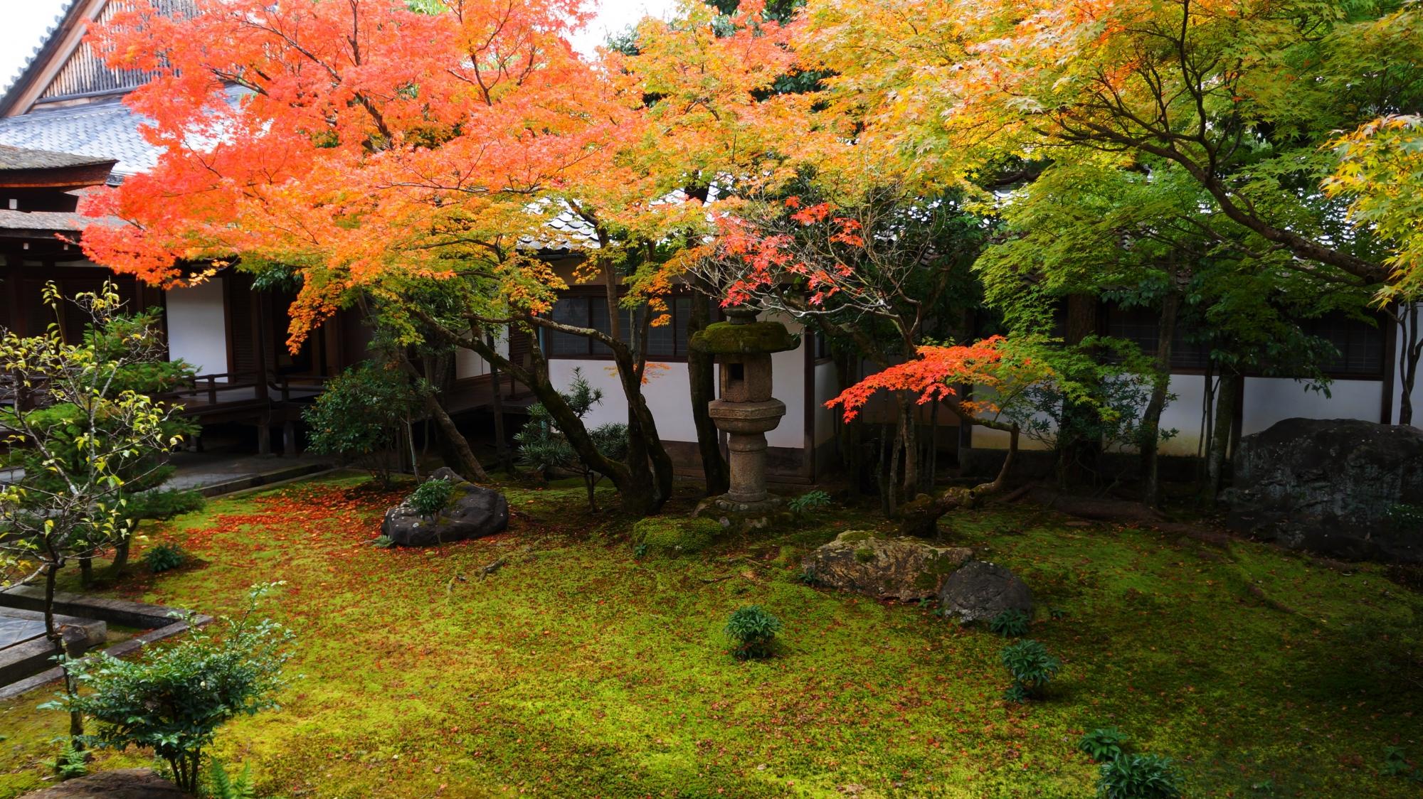 仁和寺の黒書院前庭園の紅葉