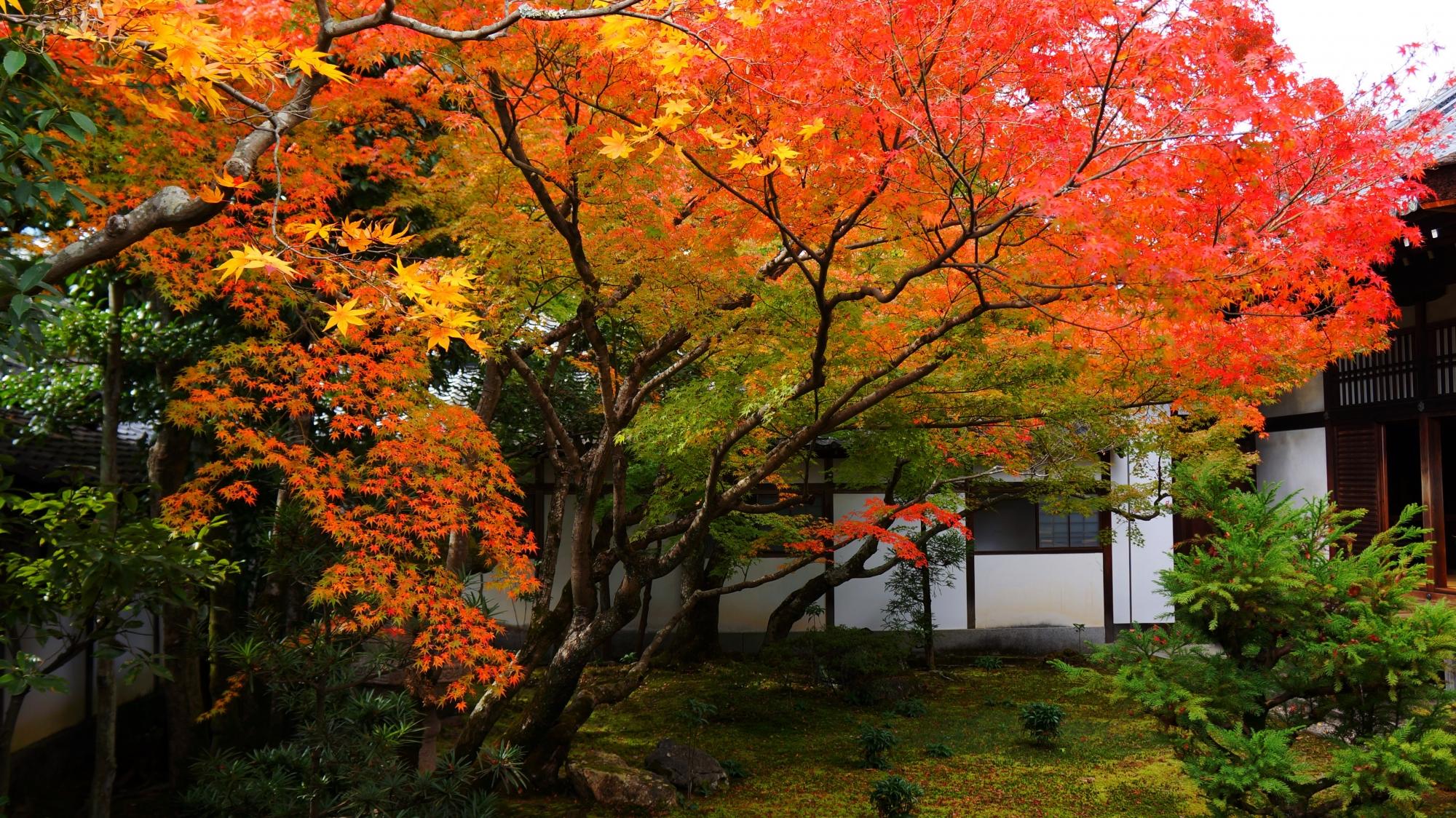 緑と白壁を染める色とりどりの紅葉