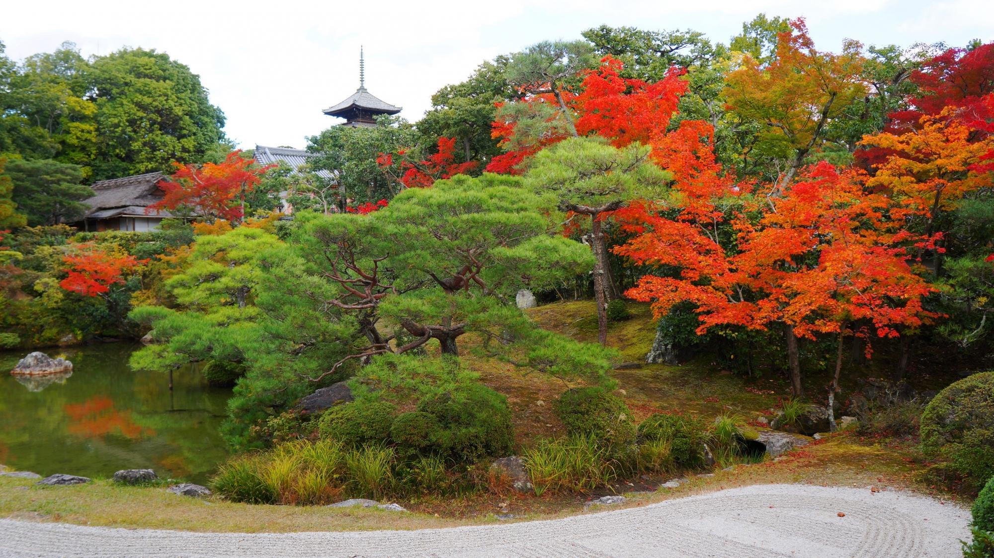 多種多様な木々と多彩な色合いの詰まった秋の仁和寺