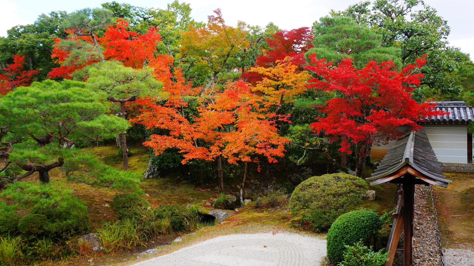 松や刈り込みなどの緑から溢れるような赤やオレンジの紅葉