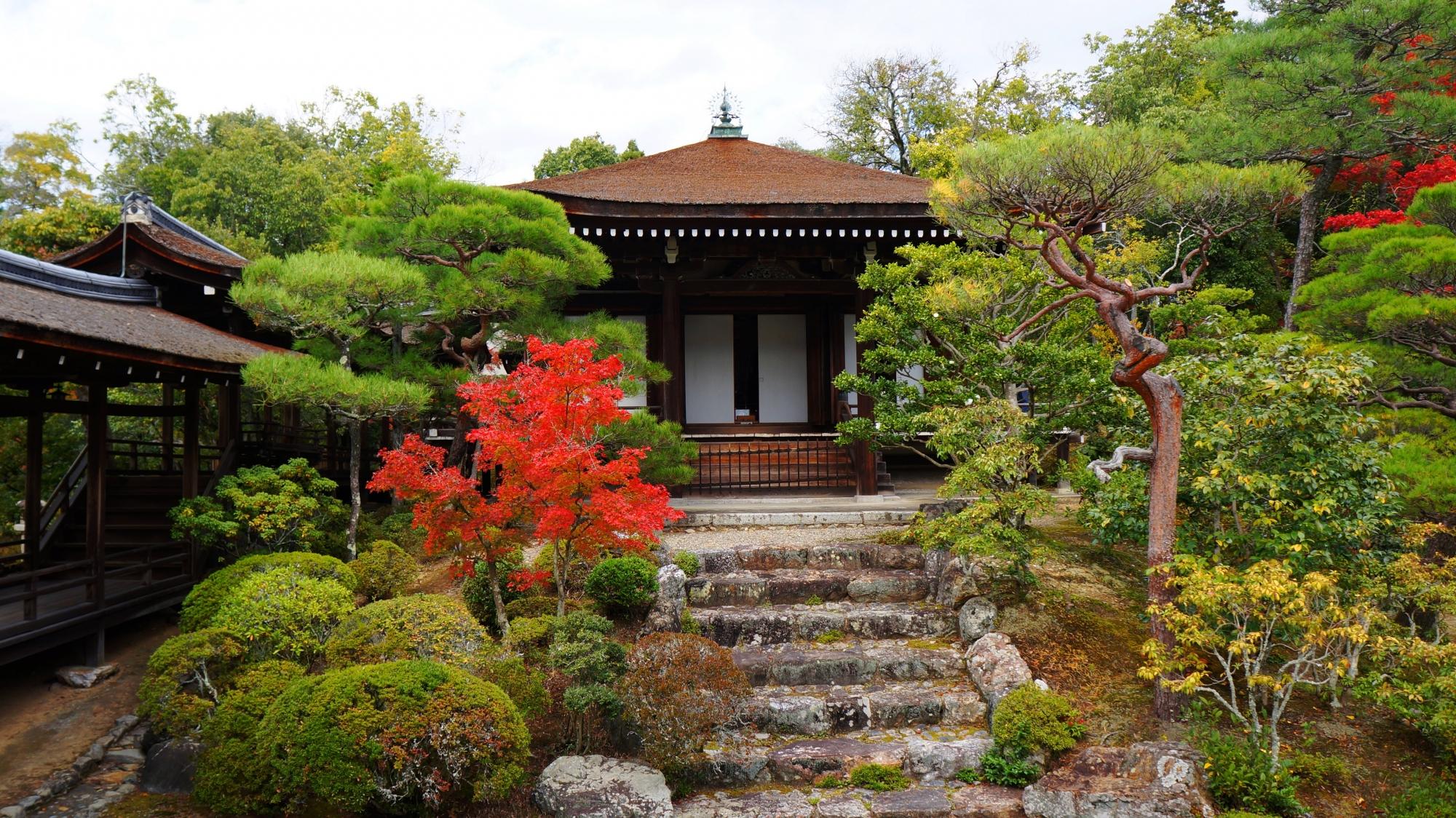 仁和寺の霊明殿と際立つ紅葉