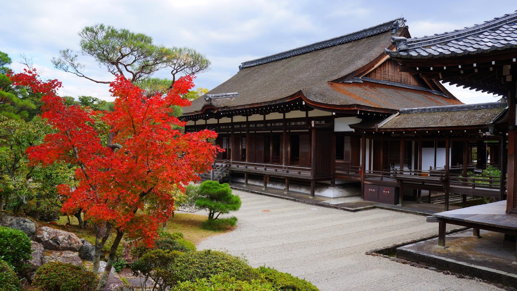 高画質 紅葉 画像 仁和寺
