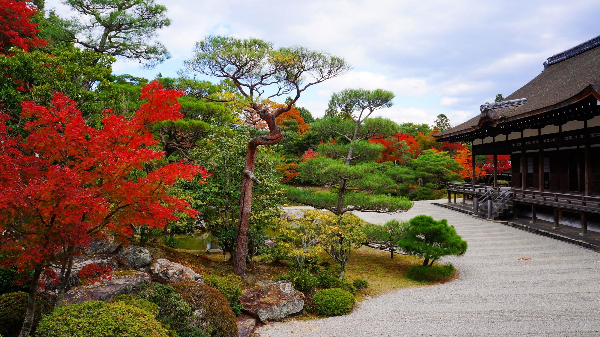 仁和寺 紅葉 御殿と庭園を彩る優美なもみじ