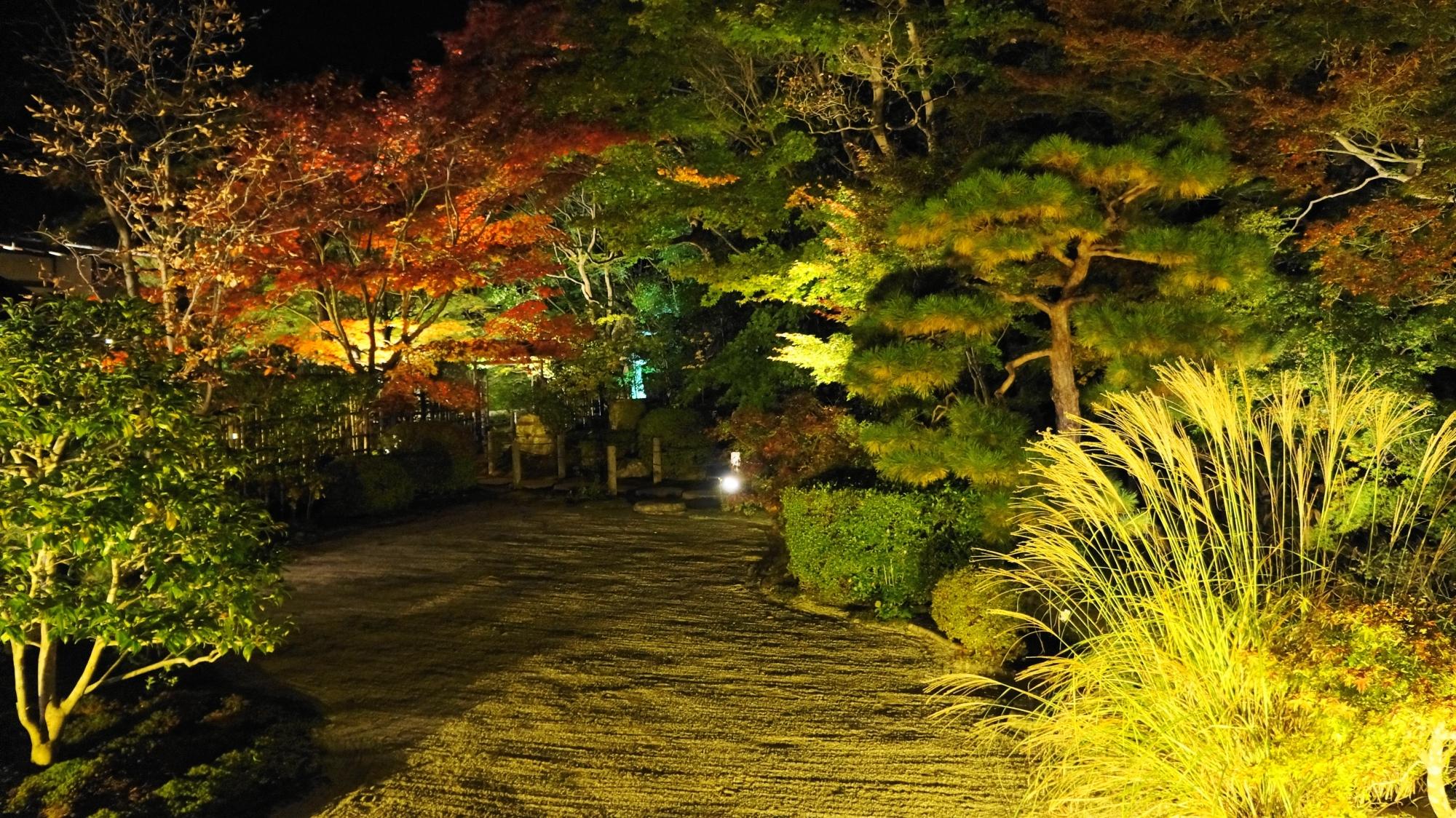 天寿庵の夜風に揺らめく芒(すすき)