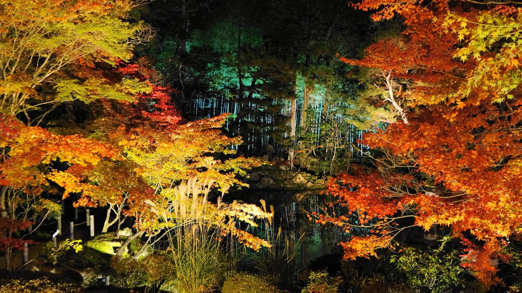 紅葉とのコントラストが綺麗な緑色にライトアップされた竹林