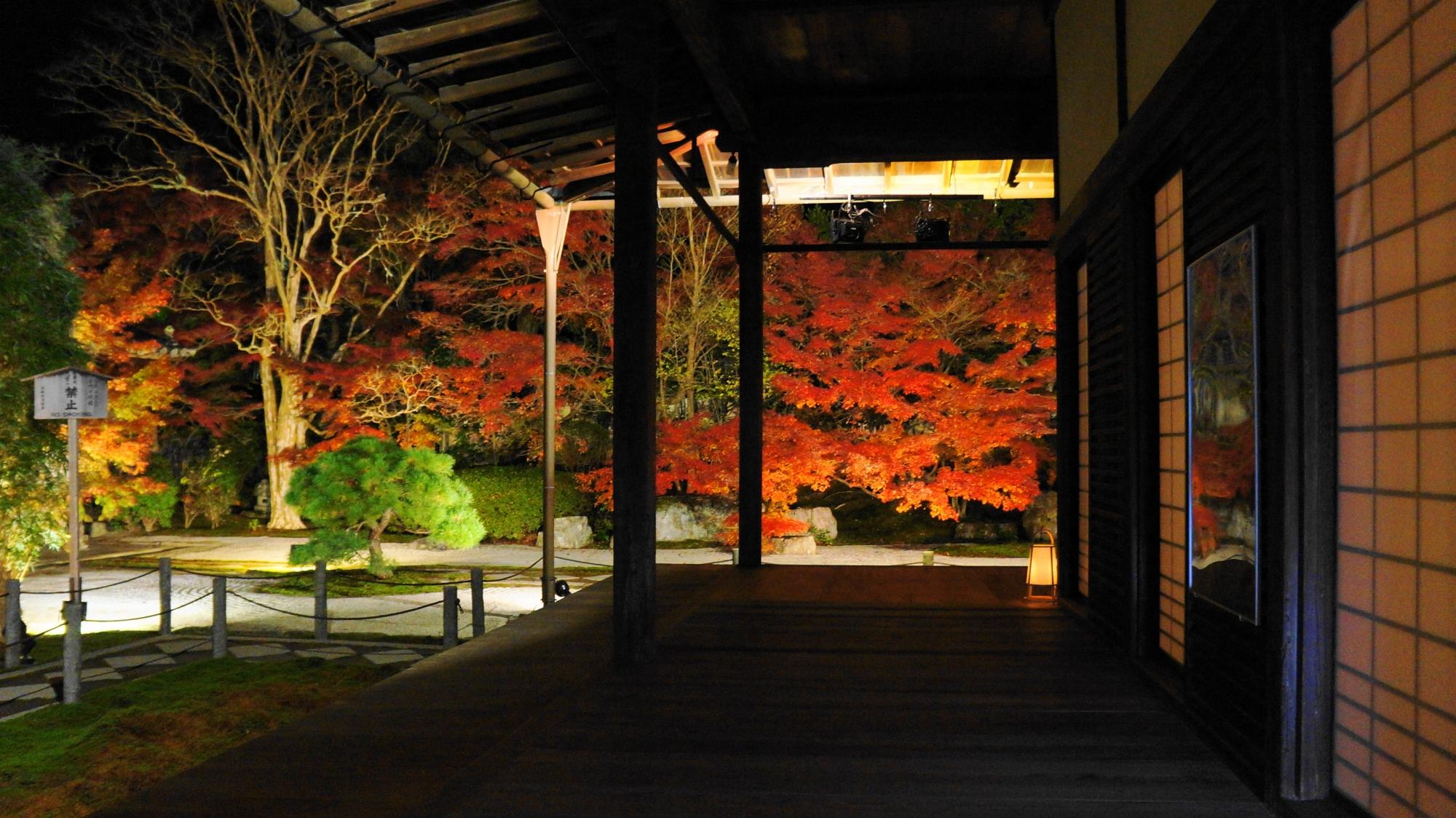 障子が夜の紅葉を演出する情緒溢れる秋の光景