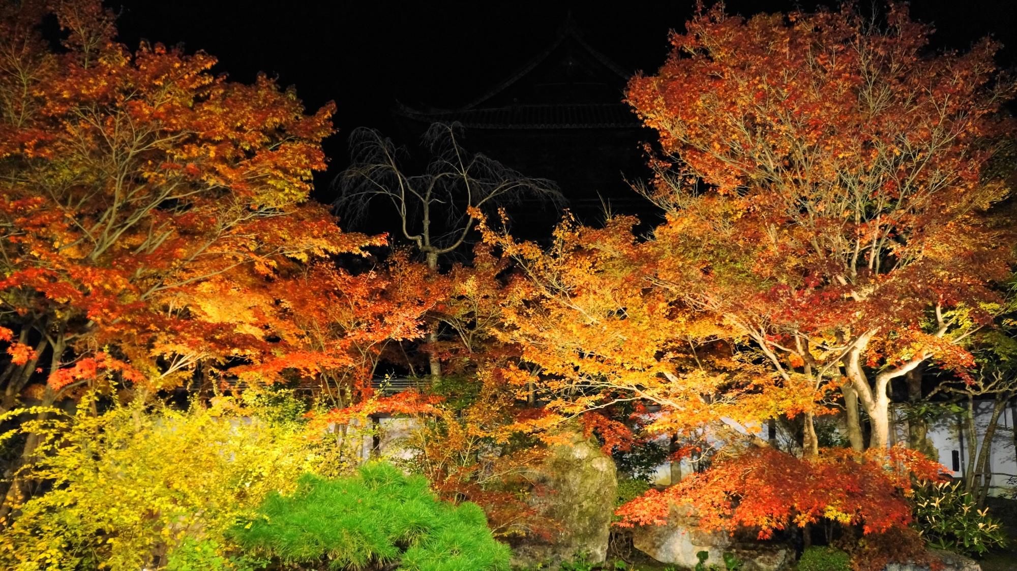 夜空を覆うような雄大なライトアップされた紅葉