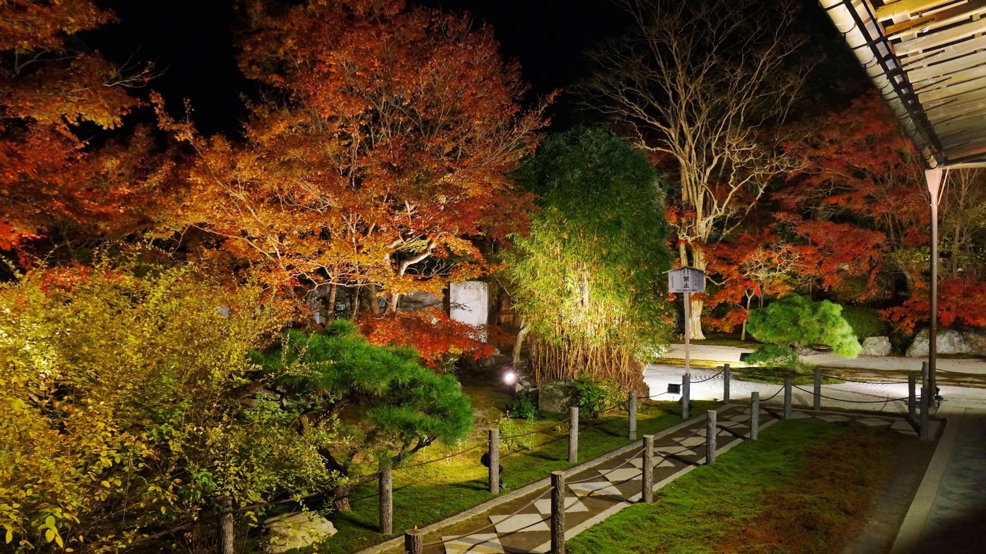 浮かび上がる多種多様な木々や植物の秋色