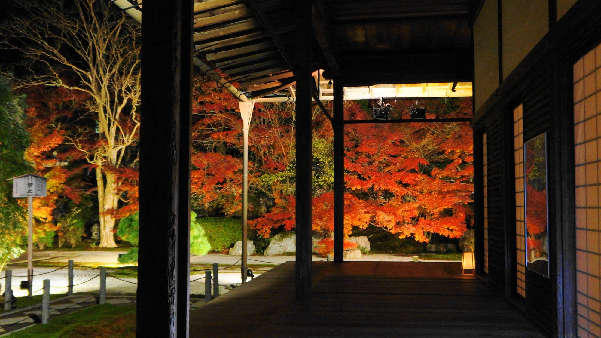 天寿庵の本堂前庭の紅葉ライトアップ
