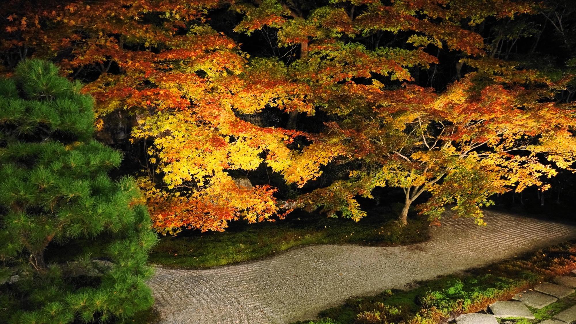 華やかな夜の黄色い紅葉