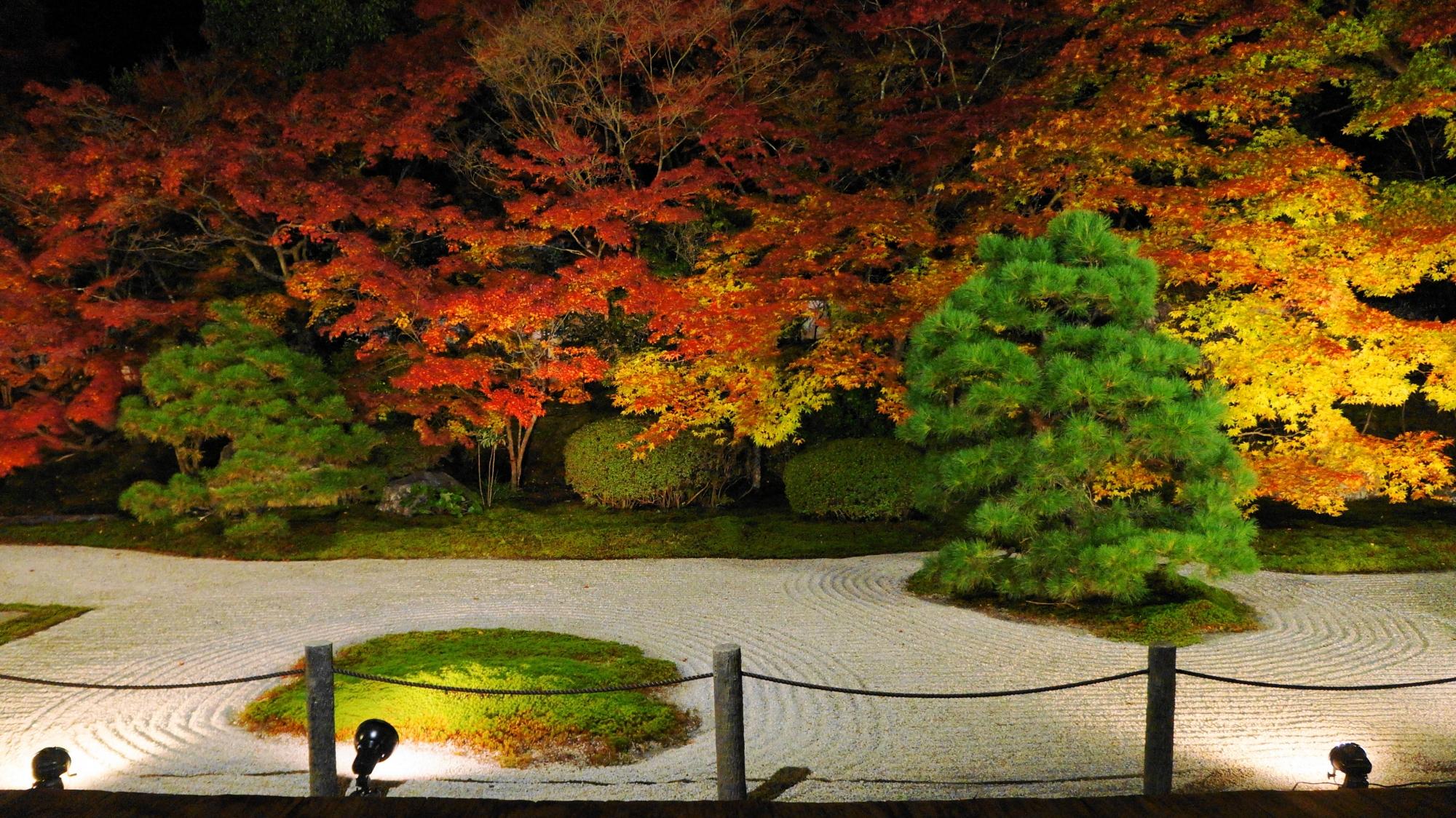 松や苔の緑も紅葉を引き立てる見事な秋の夜の天寿庵