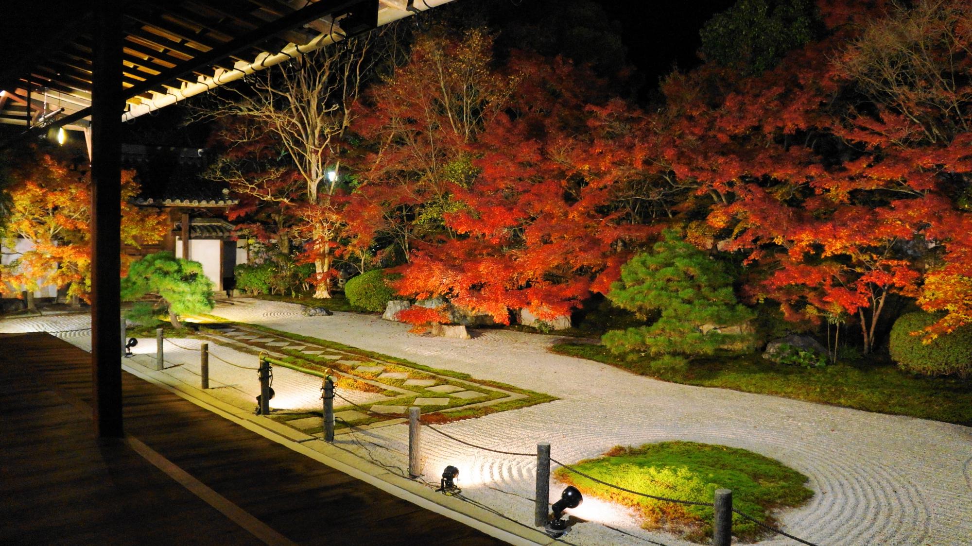 静かな夜の庭園で燃え上がるような激しい紅葉