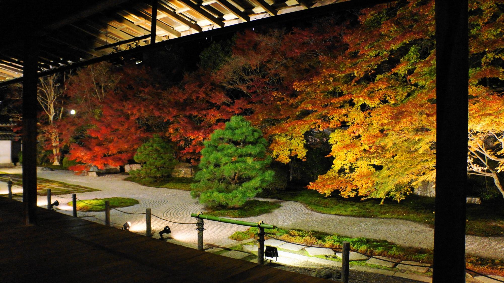 天寿庵の素晴らしい紅葉のライトアップと秋の夜の情景