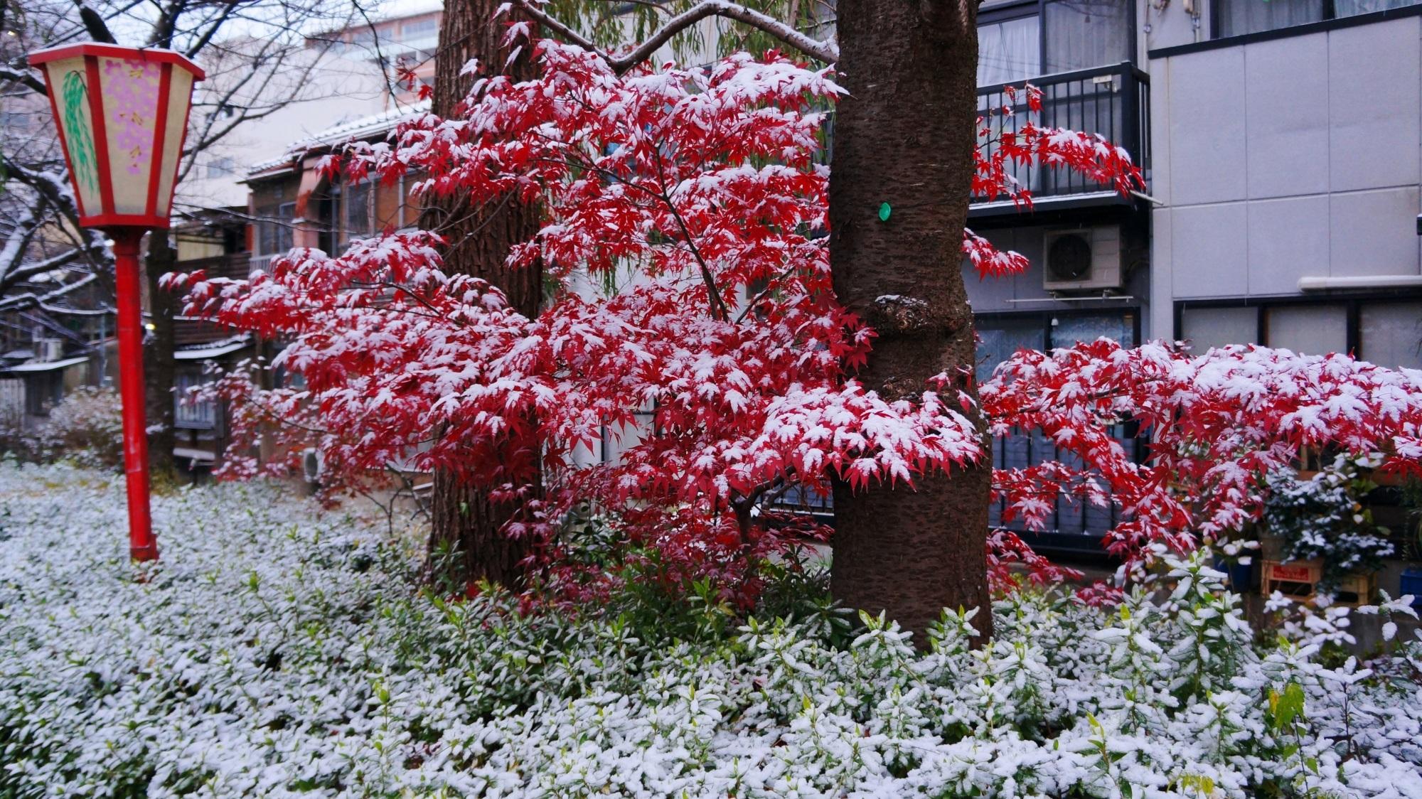 京都木屋町通の赤い紅葉に積もる白い雪