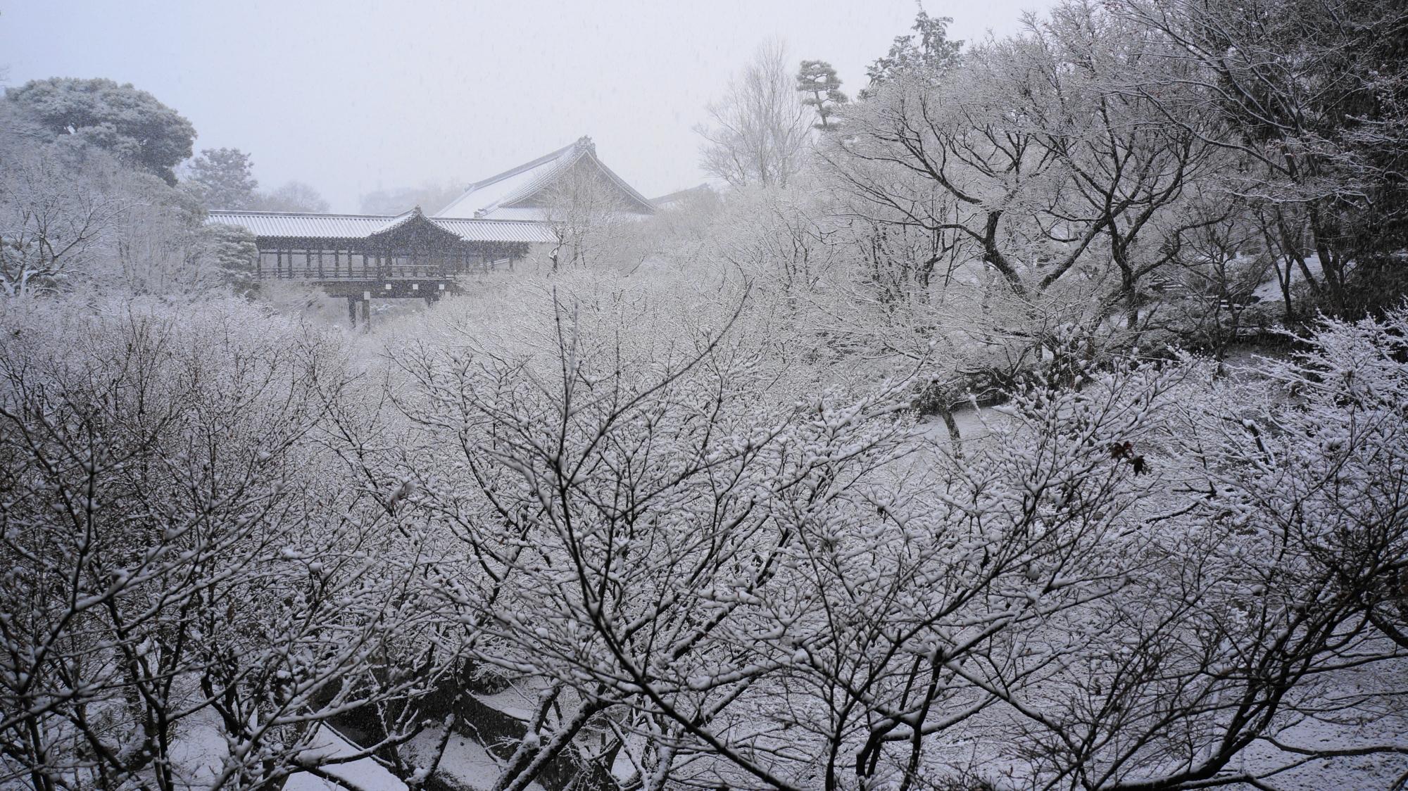 東福寺の圧巻の白銀の冬のもみじ