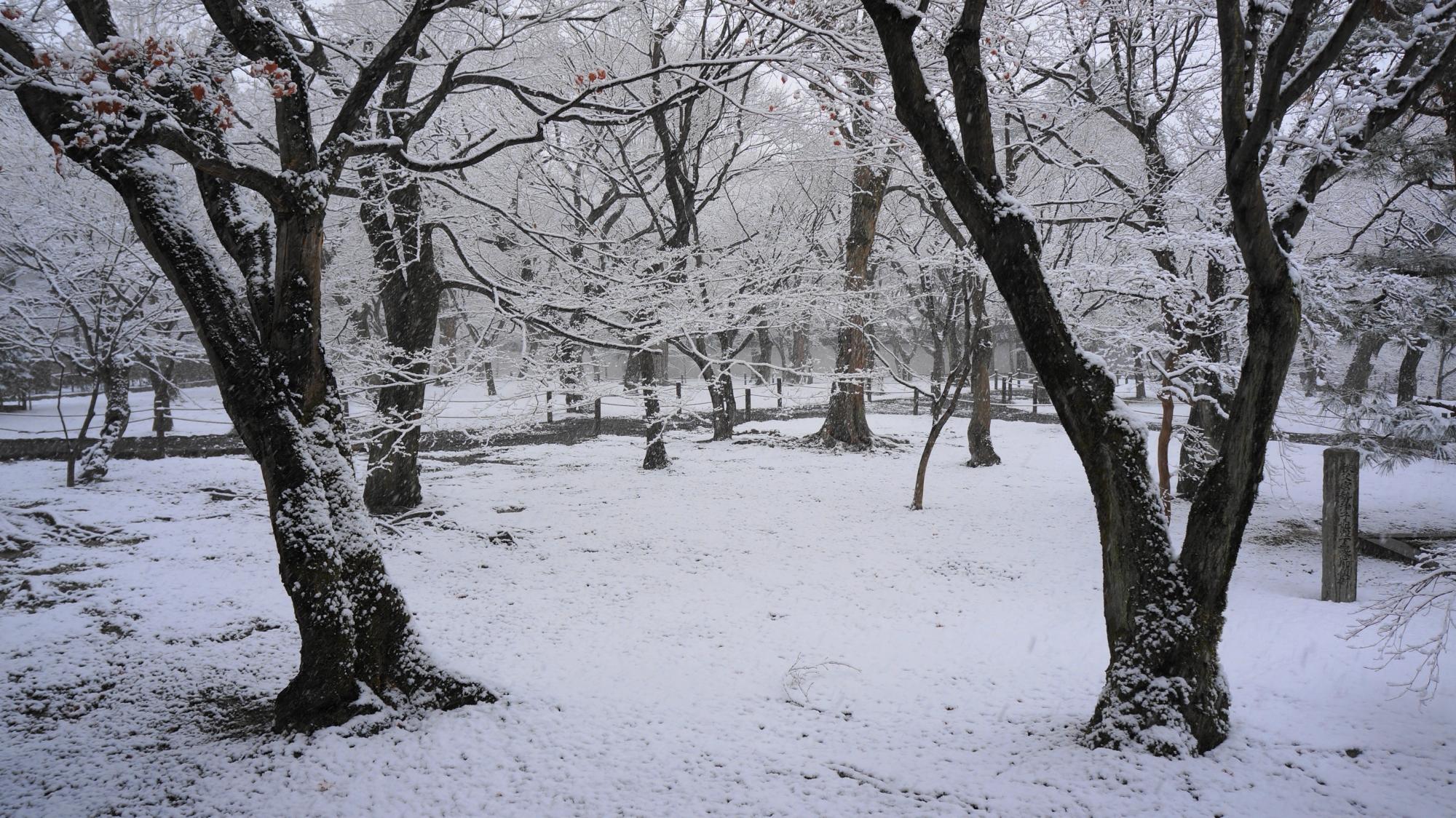 通天橋付近の雪景色
