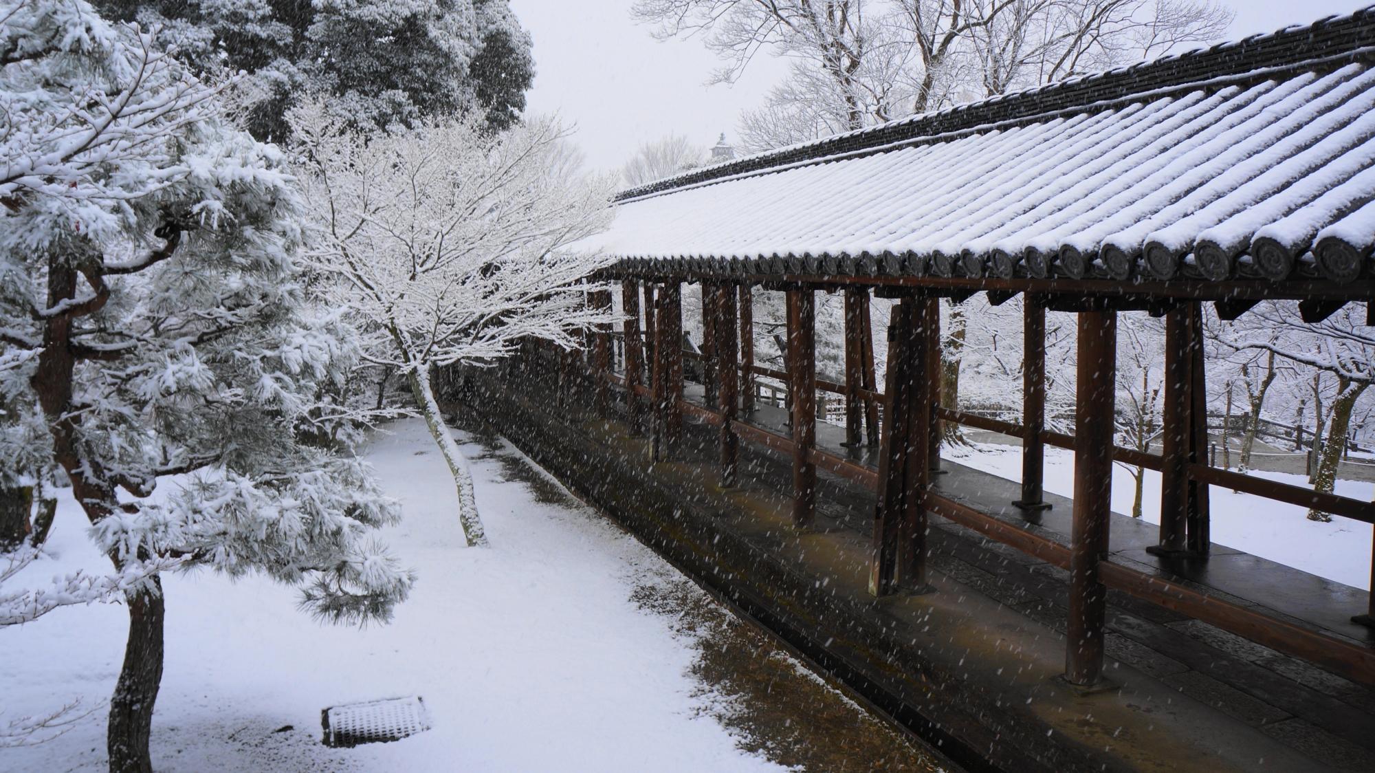 外から眺める風情ある雪の回廊