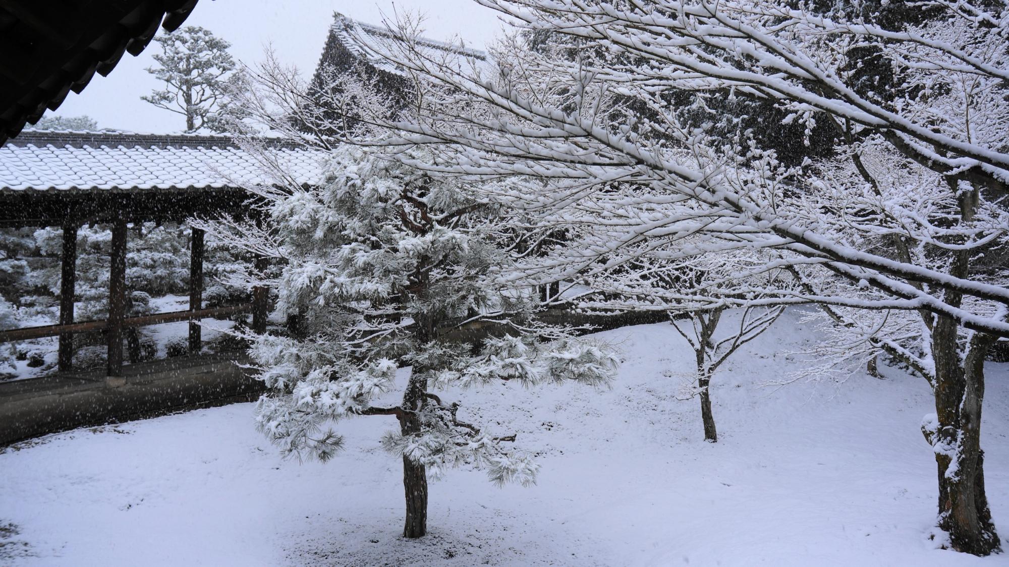 自然の作り出す芸術的な冬景色