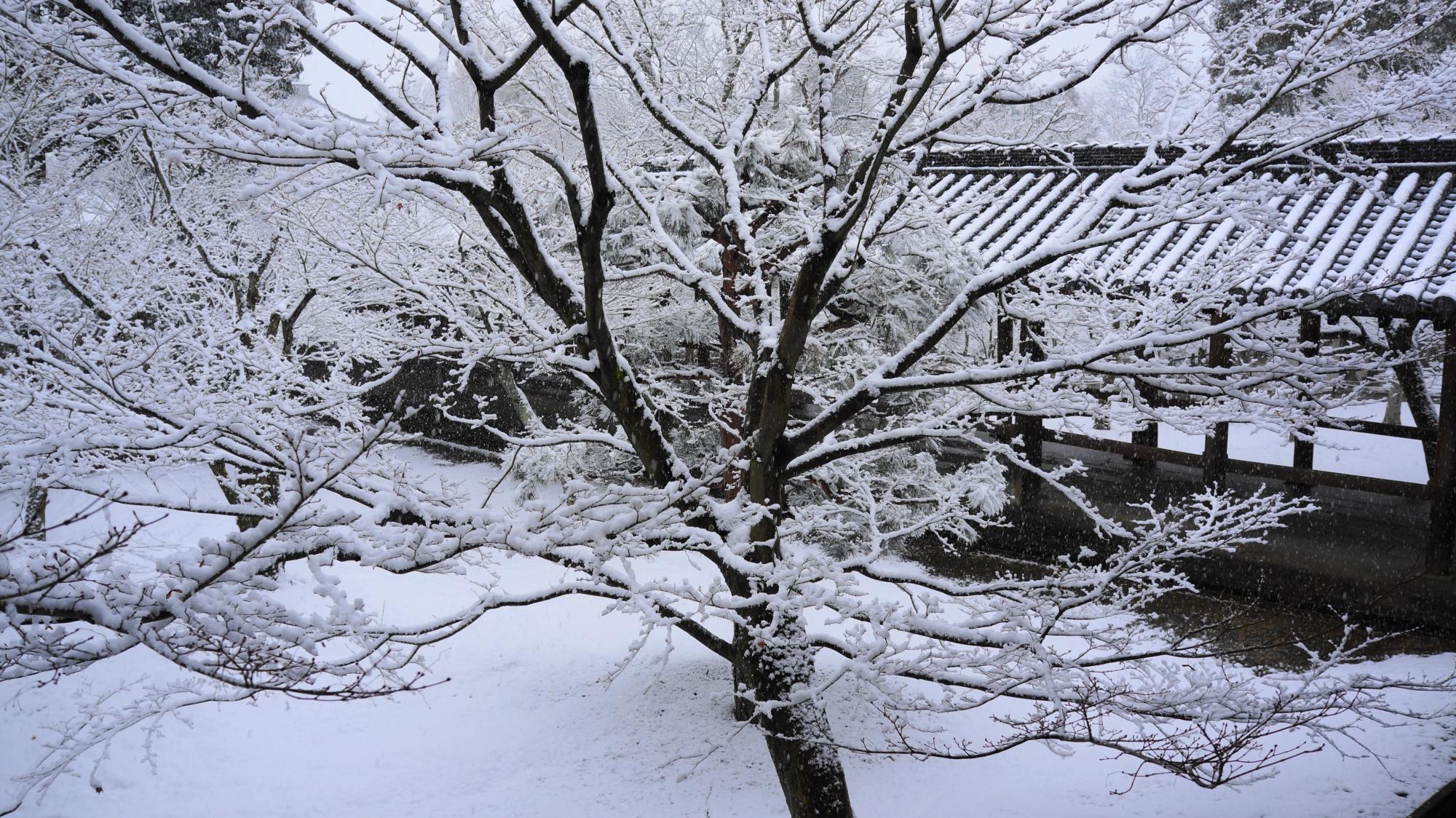 満開の華やかな雪の花