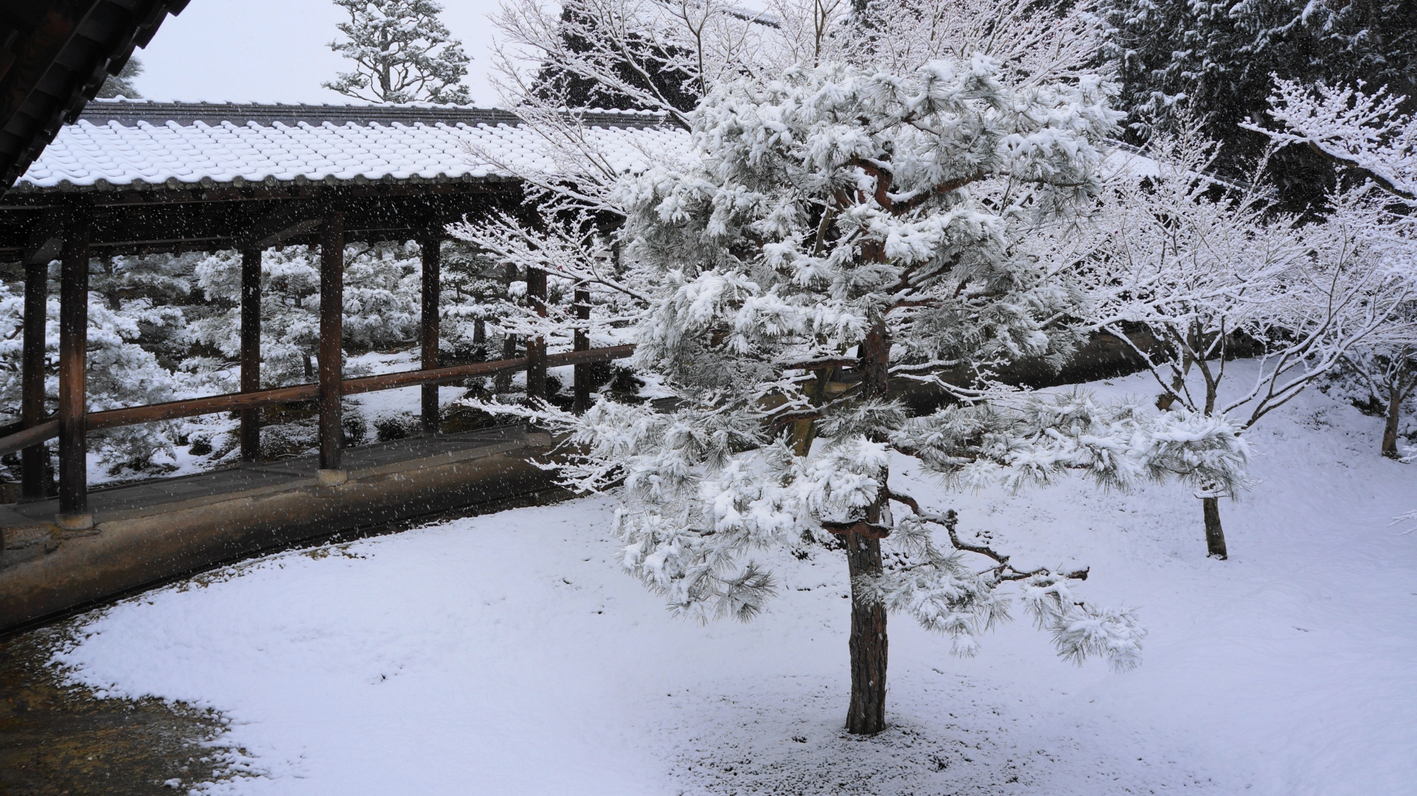 もみじ以外の木の綺麗な雪の花
