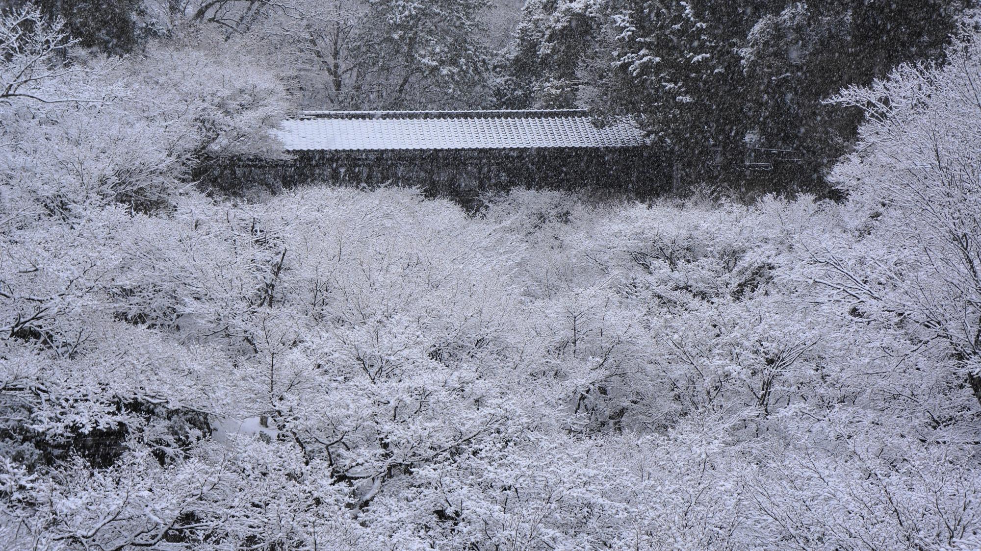 満開の雪の花の中に佇む臥雲橋