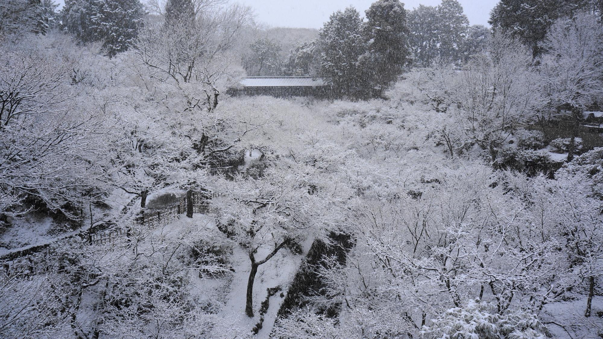 東福寺の圧巻のもみじの冬景色
