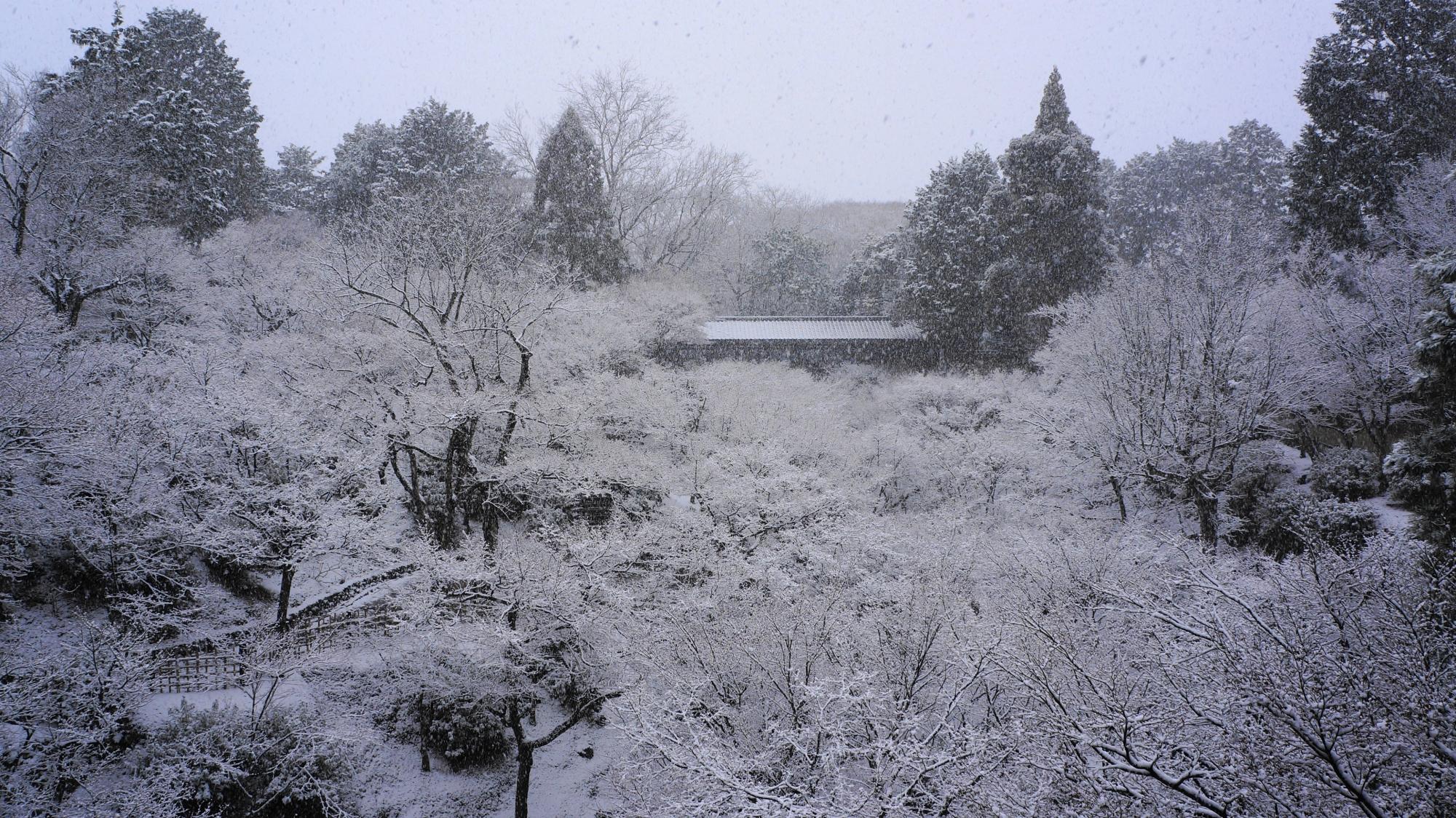 通天橋から眺めた臥雲橋ともみじの雪景色