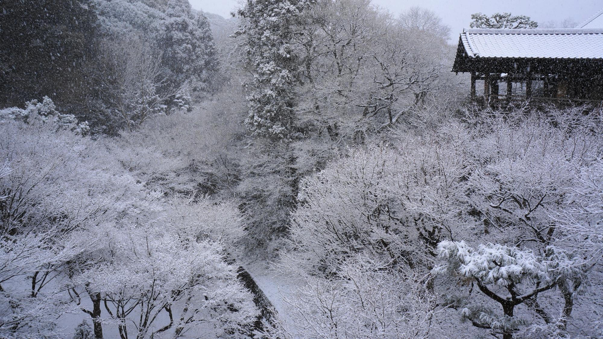 凄すぎる白銀の冬のもみじ