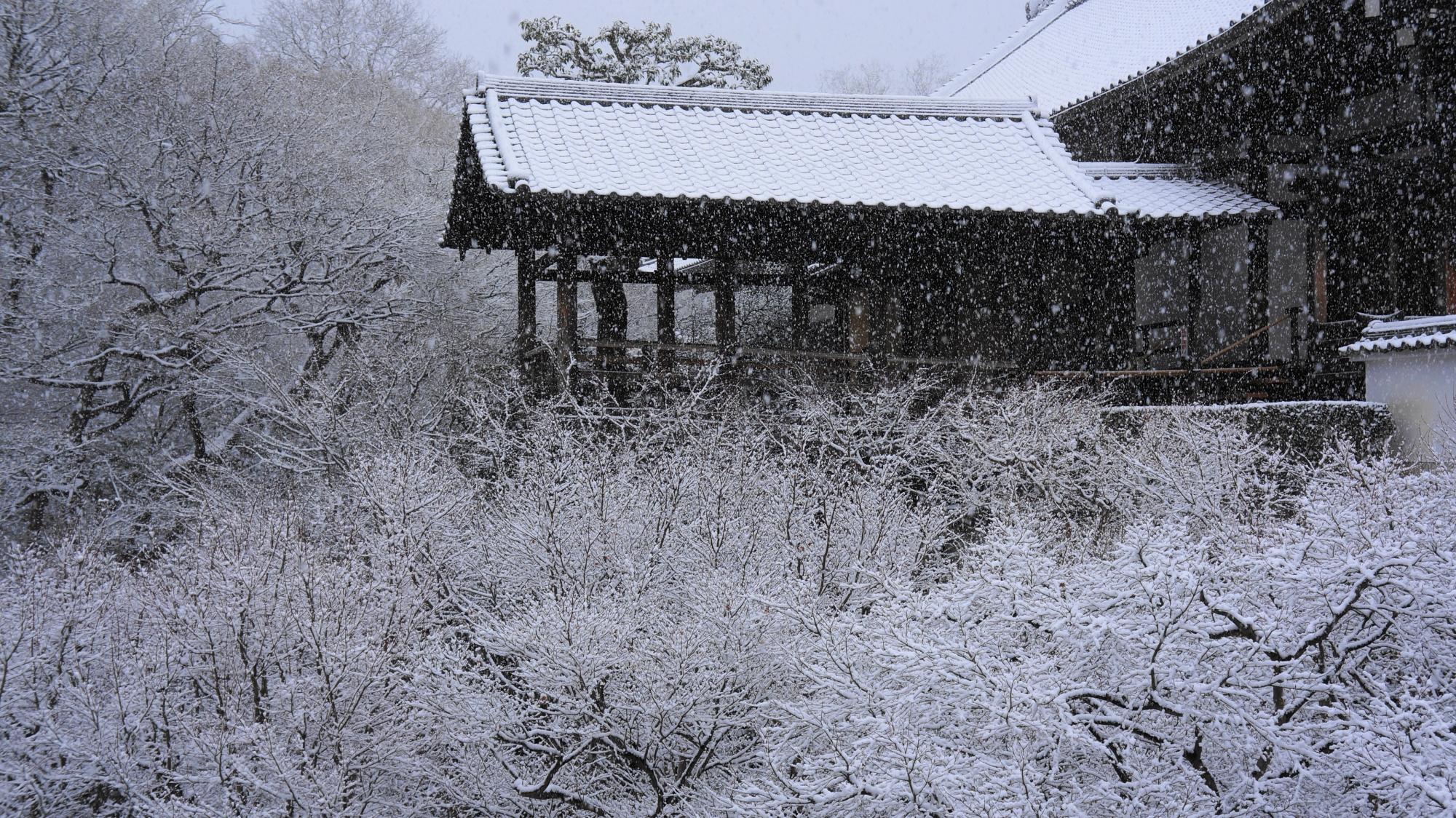 真っ白な雪につつまれた通天台