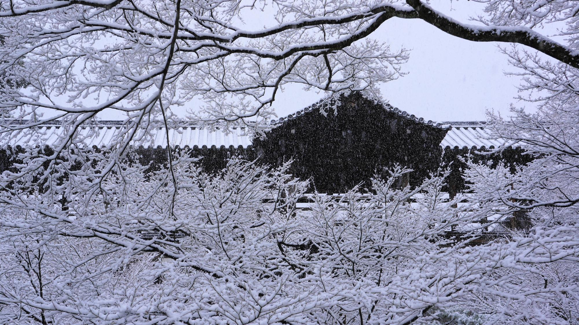雪の枝が演出する通天橋の冬景色