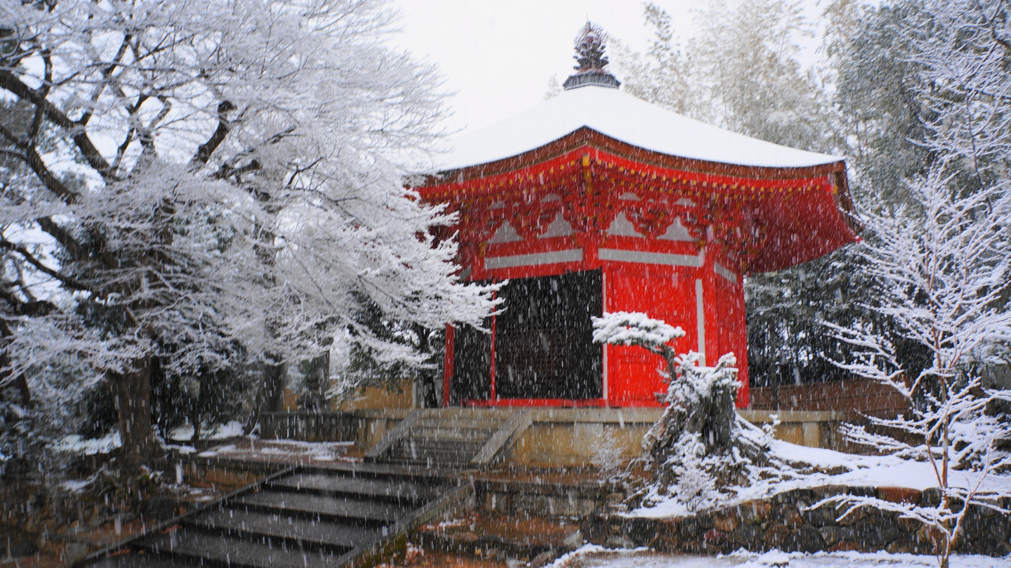 真っ白な雪の中で映える朱色