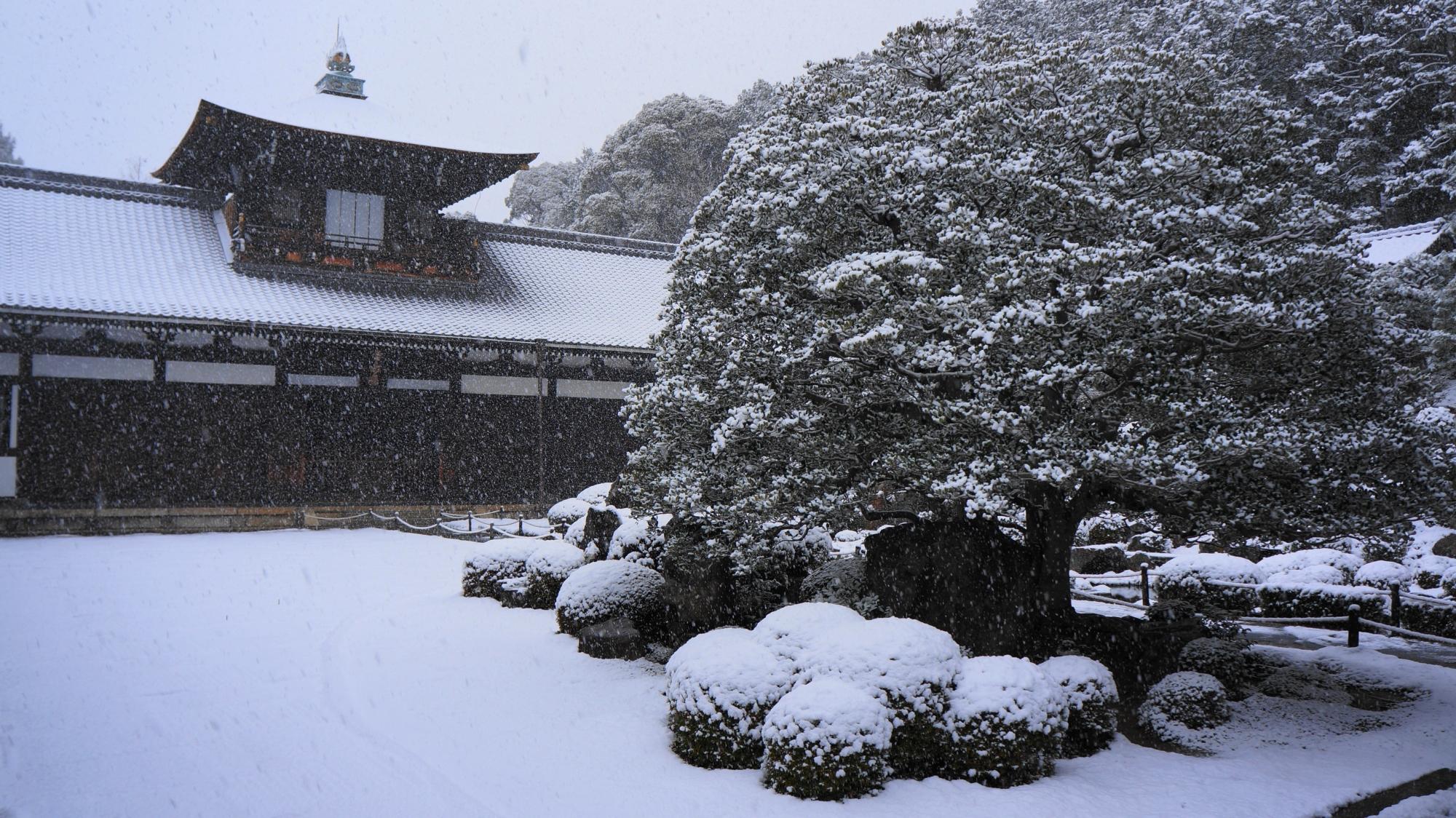 見事な雪化粧の庭園や木々