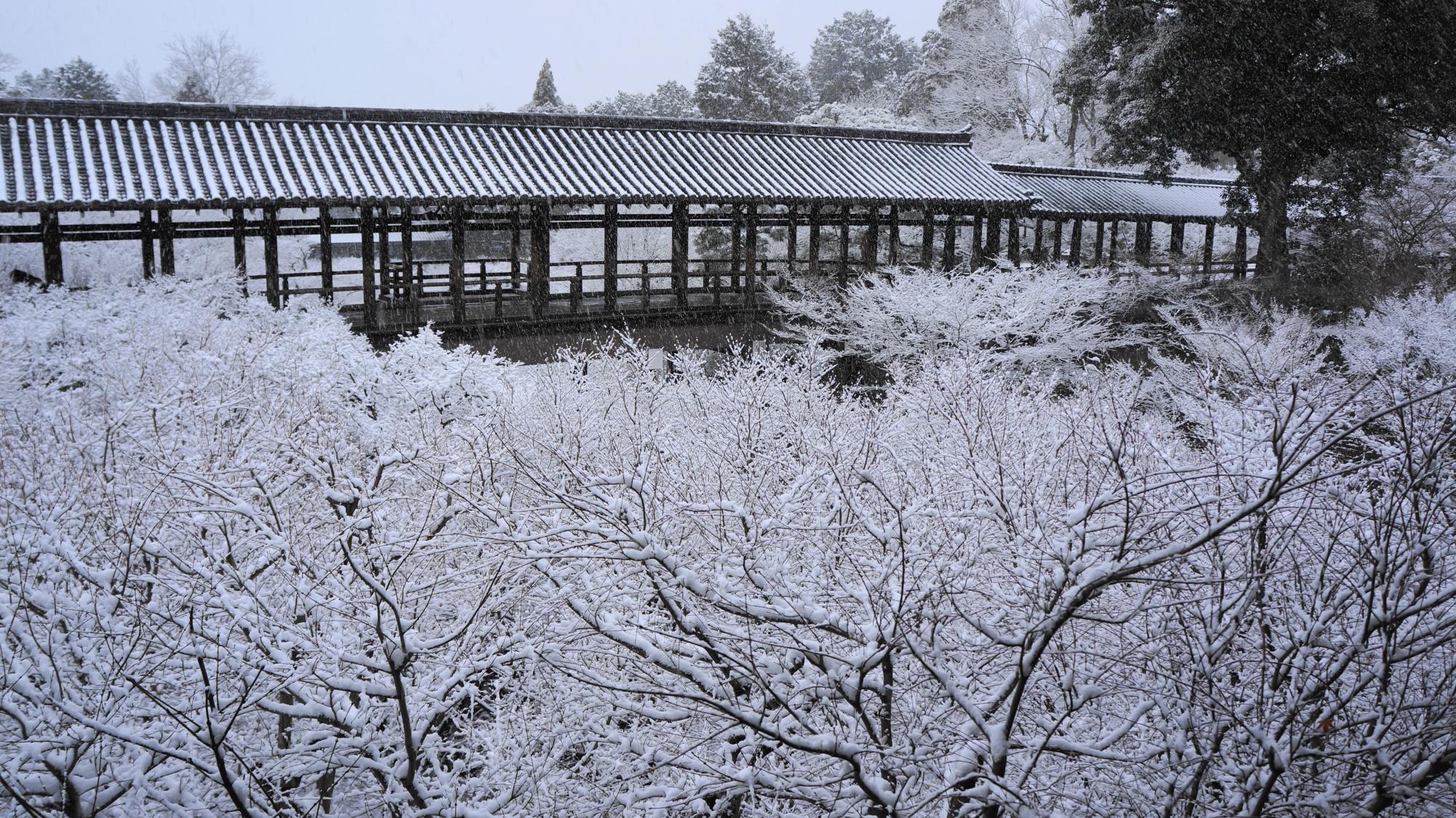 東福寺の白銀の中に佇む通天橋ともみじの冬景色