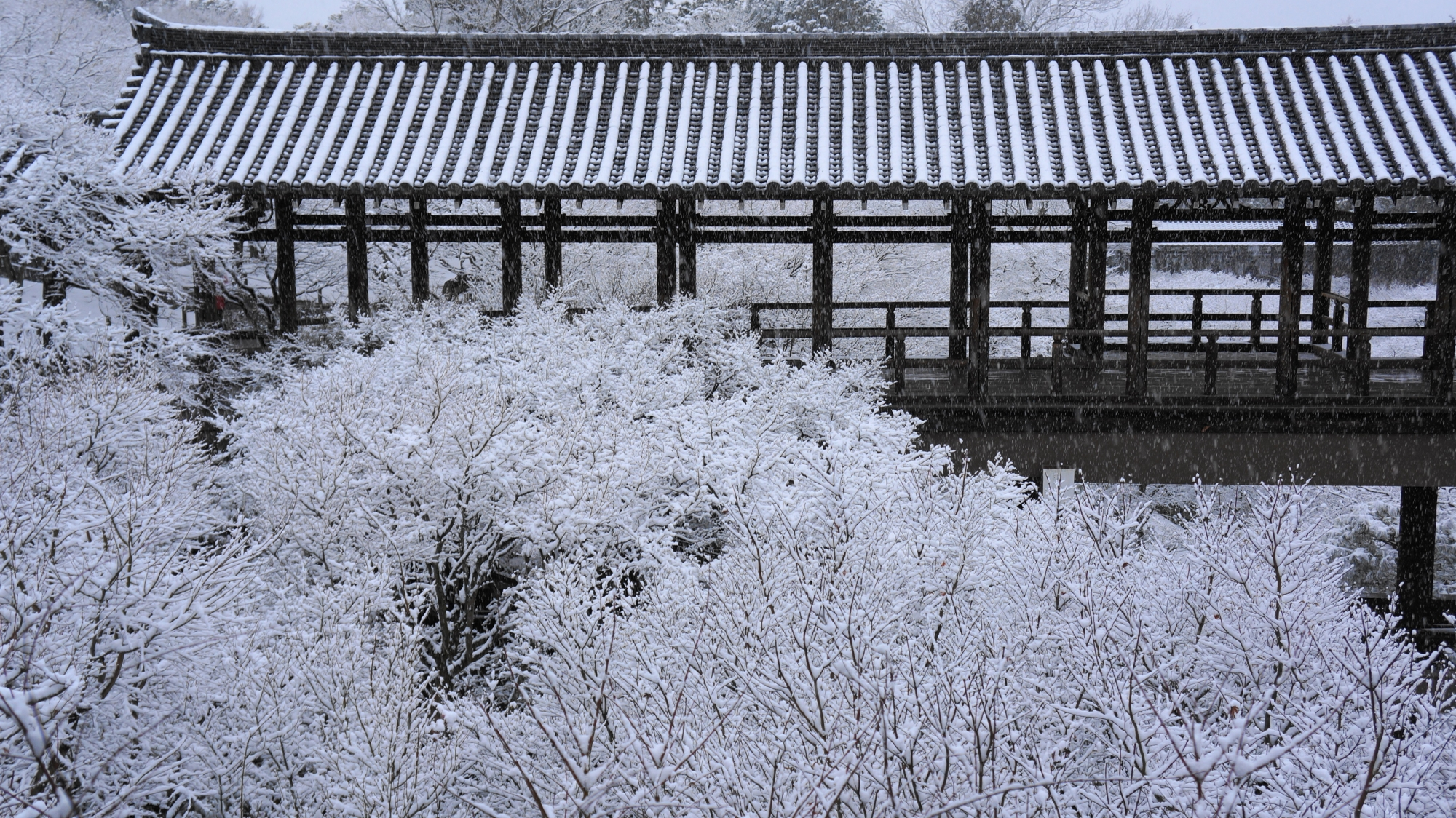 雪の通天橋と芸術的な雪のもみじ